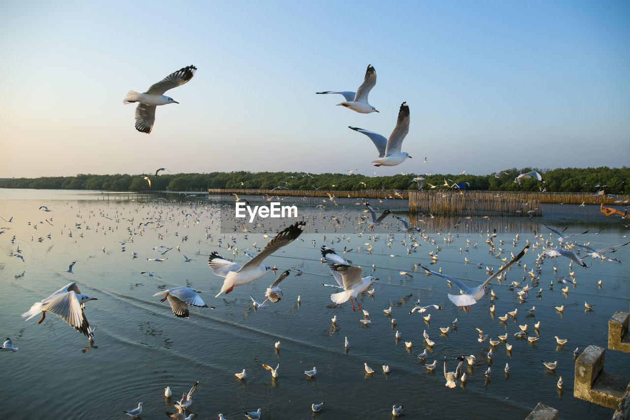 animal wildlife, bird, group of animals, animals in the wild, animal, vertebrate, animal themes, large group of animals, flying, water, spread wings, sky, nature, seagull, mid-air, lake, beauty in nature, flock of birds, no people