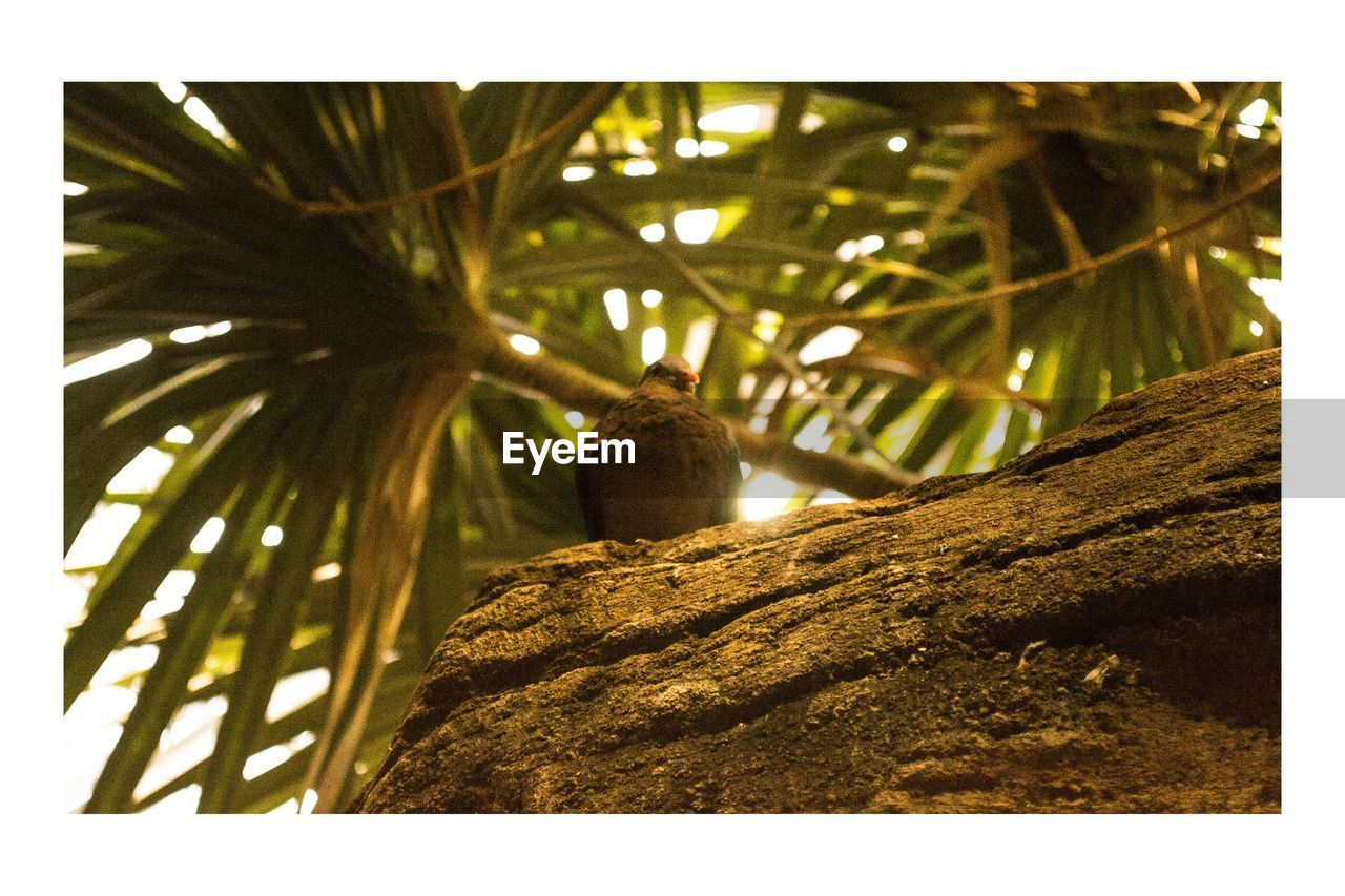 tree, no people, day, low angle view, palm tree, close-up, nature, outdoors, animal themes
