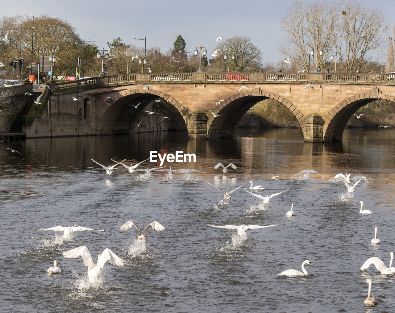water, animals in the wild, animal themes, bird, animal wildlife, animal, vertebrate, group of animals, large group of animals, river, bridge - man made structure, bridge, architecture, built structure, nature, waterfront, flying, day, arch, no people, arch bridge, outdoors, seagull, flock of birds