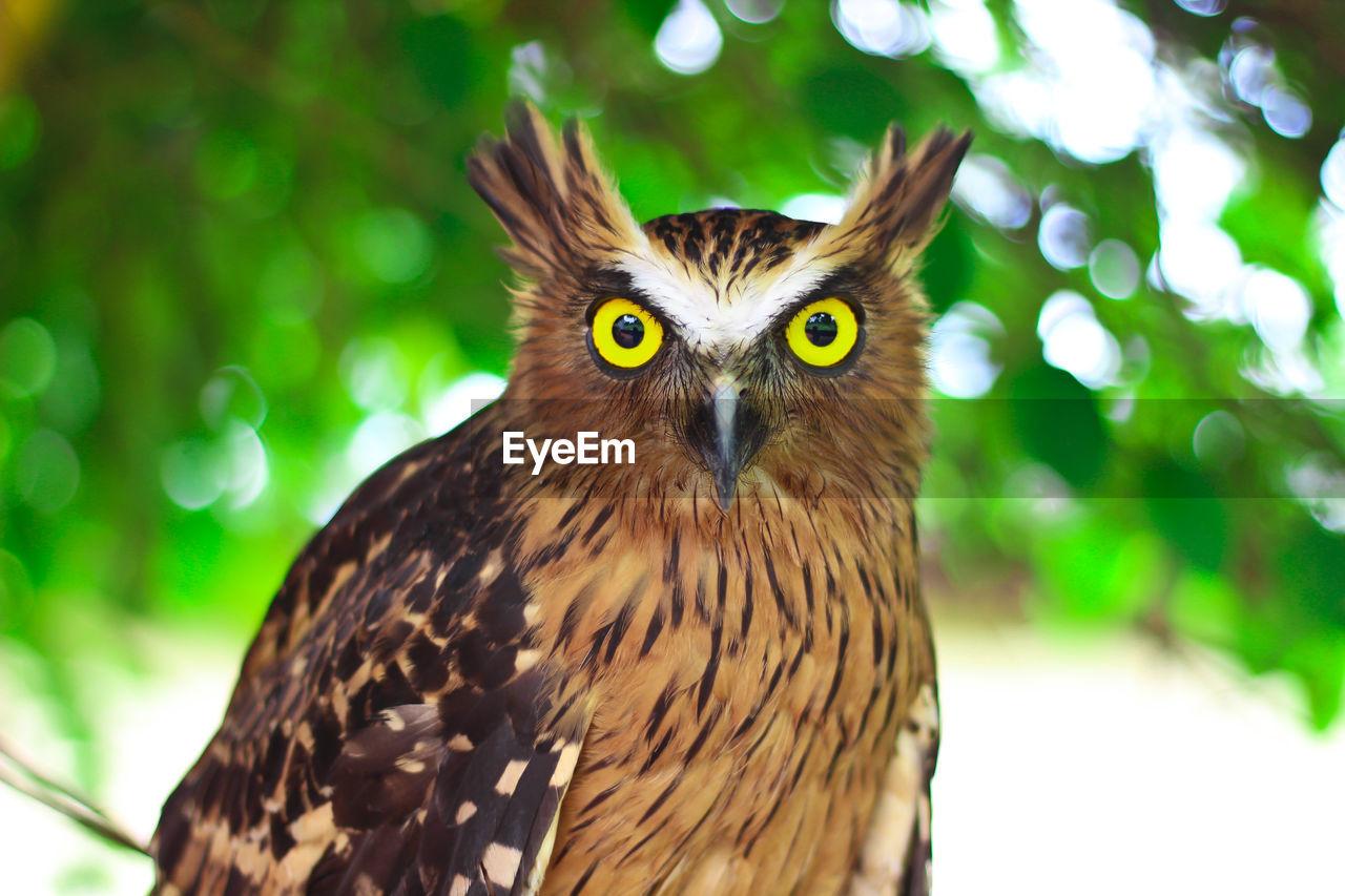 PORTRAIT OF OWL ON TREE