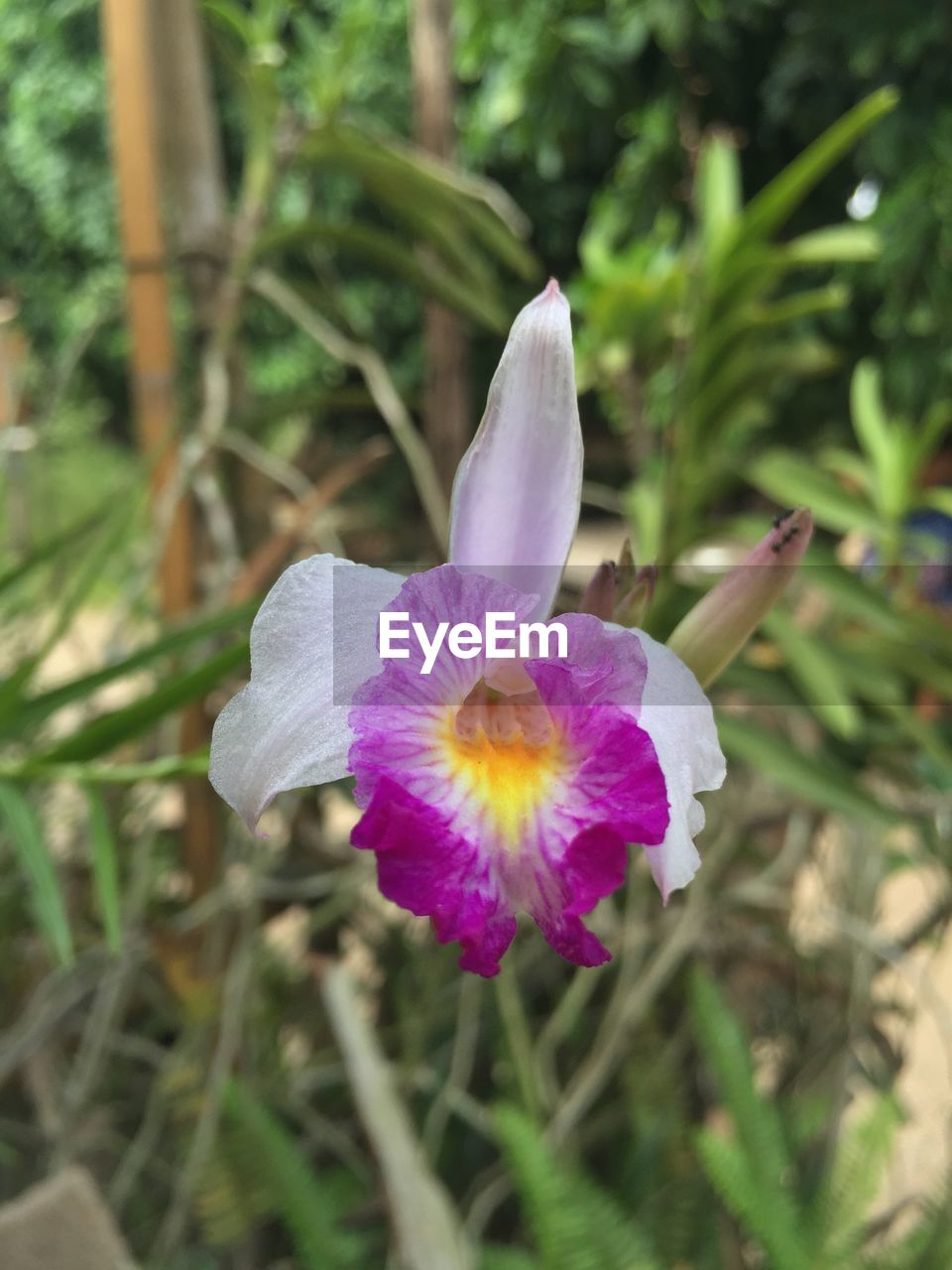flower, growth, petal, nature, fragility, freshness, beauty in nature, flower head, no people, plant, day, outdoors, close-up, blooming