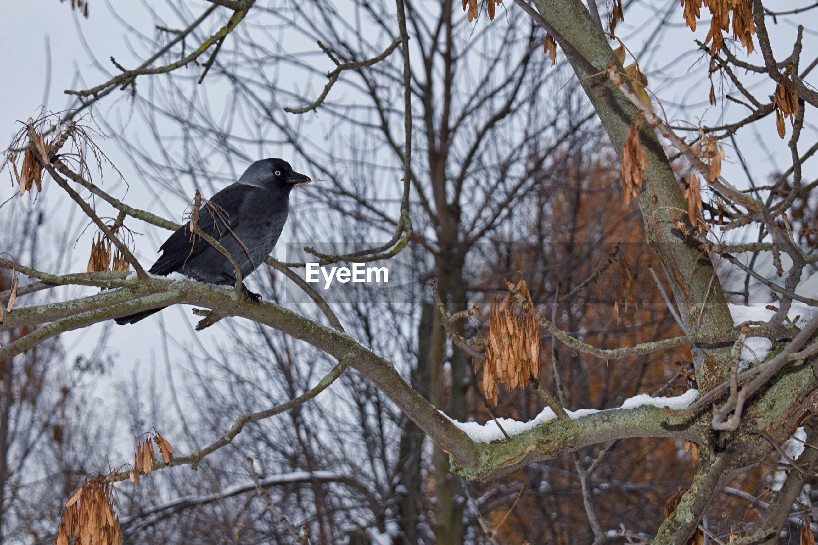 Bird perching on branch during winter