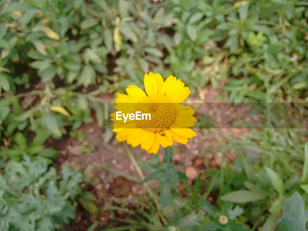 flower, yellow, growth, nature, plant, fragility, petal, beauty in nature, flower head, freshness, blooming, no people, outdoors, close-up, day