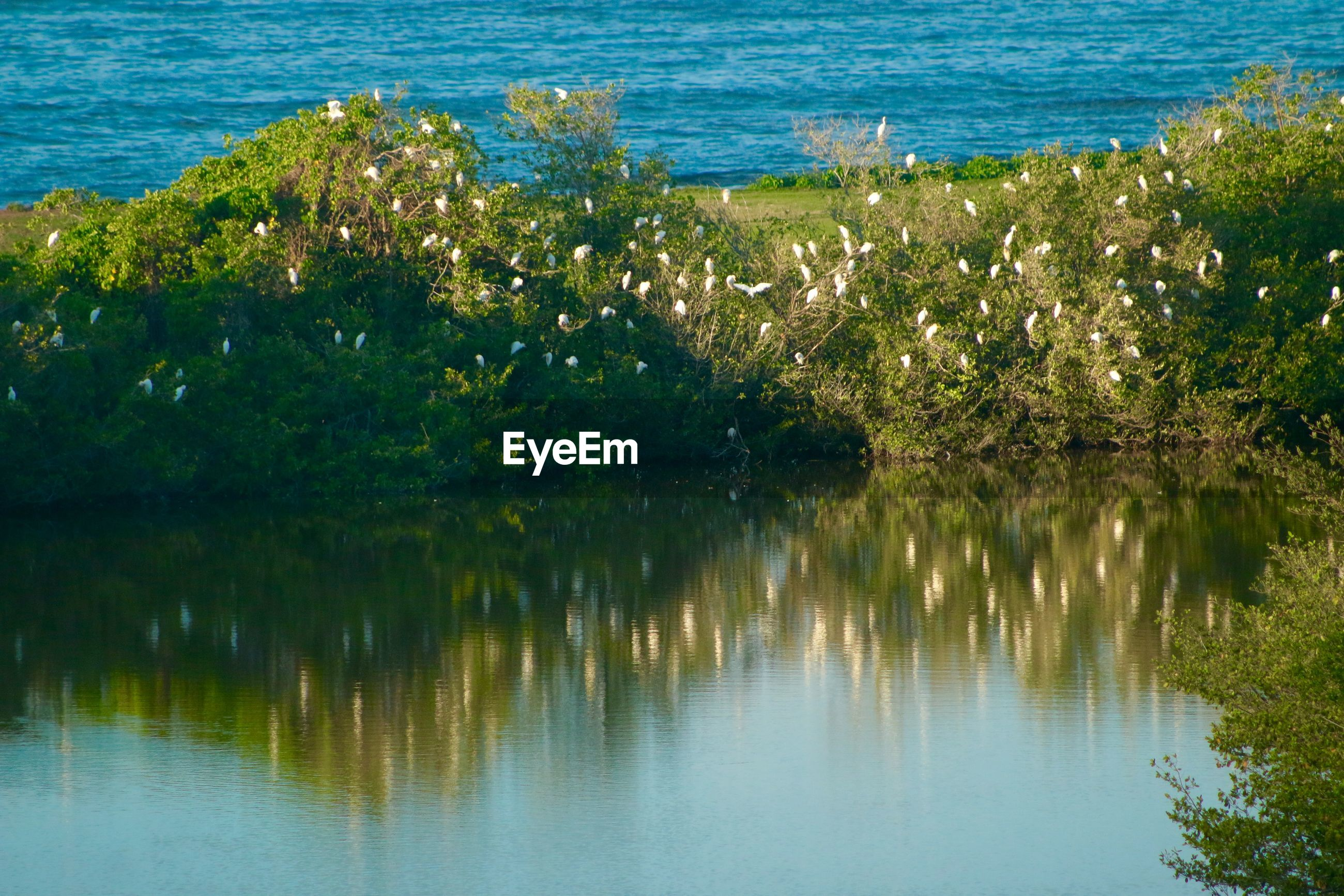 Egrets perching on trees by river