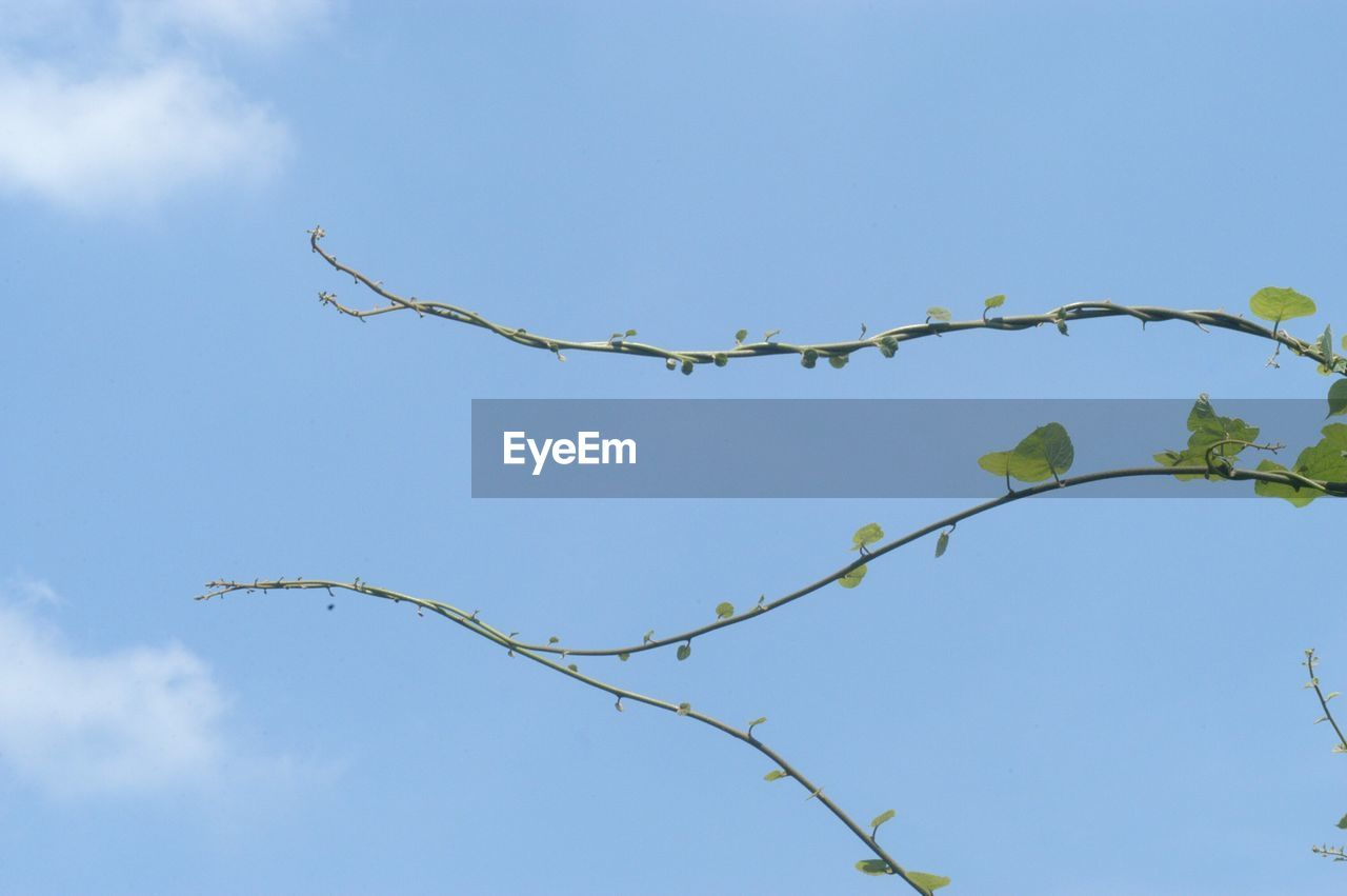low angle view, nature, day, outdoors, leaf, no people, beauty in nature, growth, plant, sky, blue, fragility, freshness, close-up
