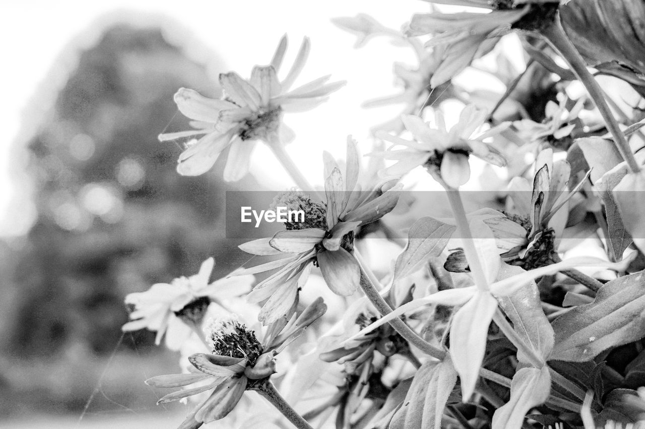 flower, petal, fragility, nature, flower head, beauty in nature, growth, no people, freshness, day, outdoors, plant, close-up, blooming
