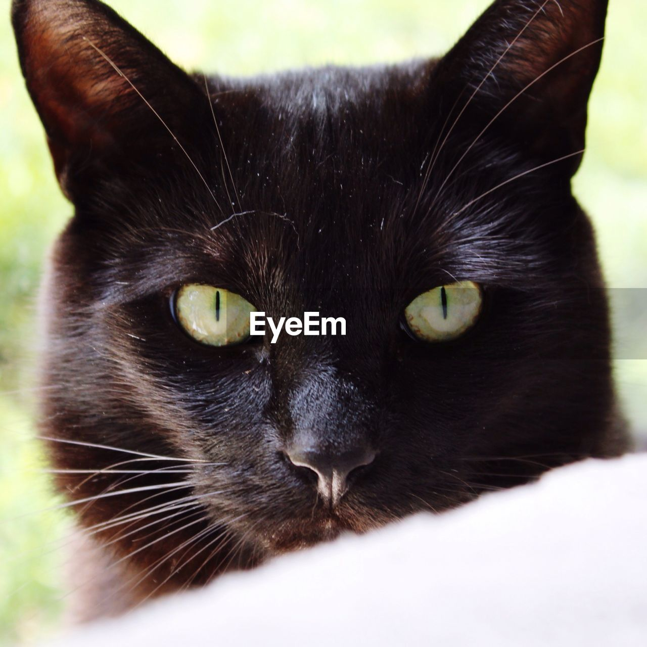 cat, domestic, pets, mammal, feline, domestic cat, animal themes, domestic animals, animal, one animal, portrait, looking at camera, vertebrate, close-up, whisker, green eyes, black color, animal body part, no people, animal eye, animal head, yellow eyes, snout