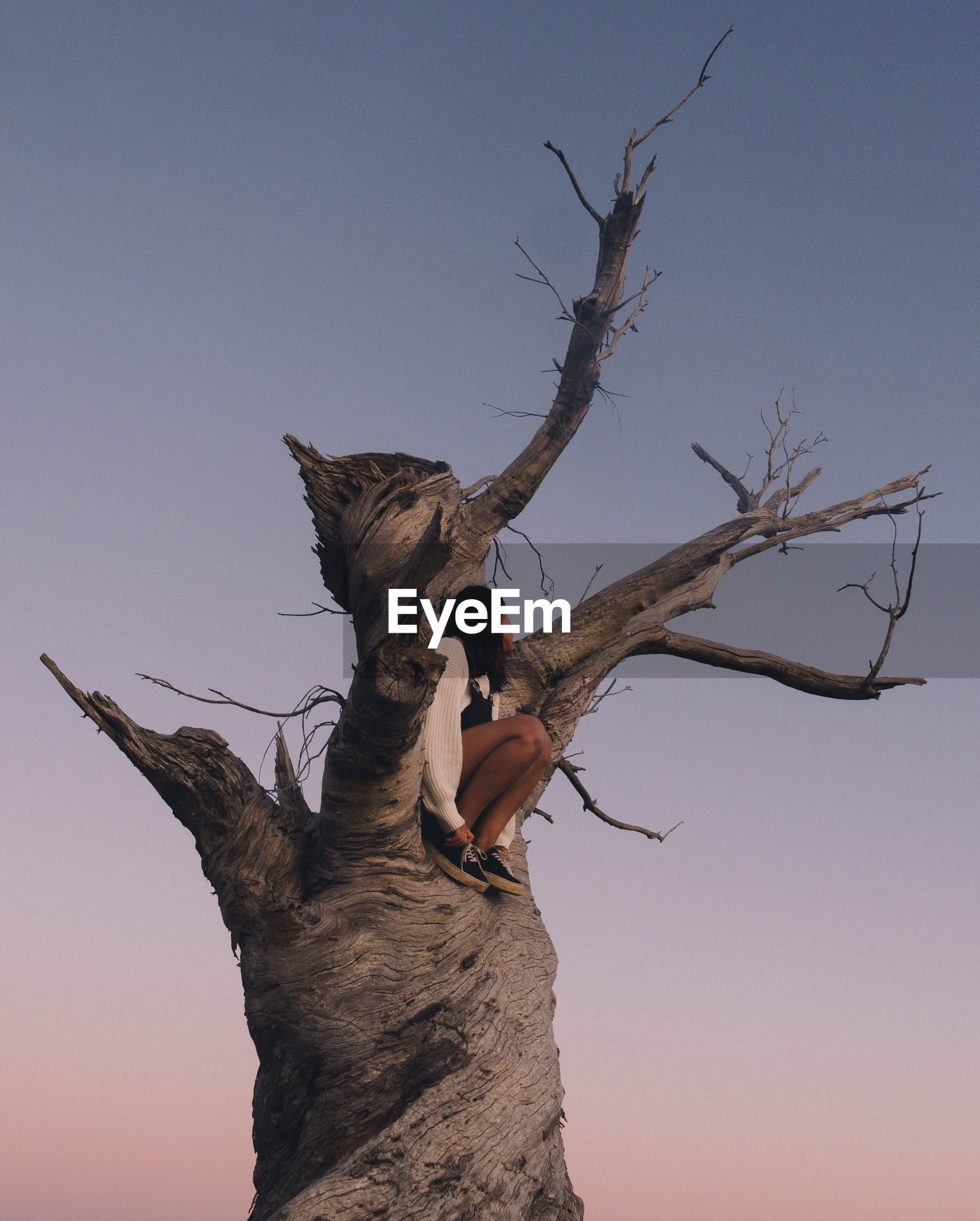 Low angle view of woman sitting on dead tree against sky