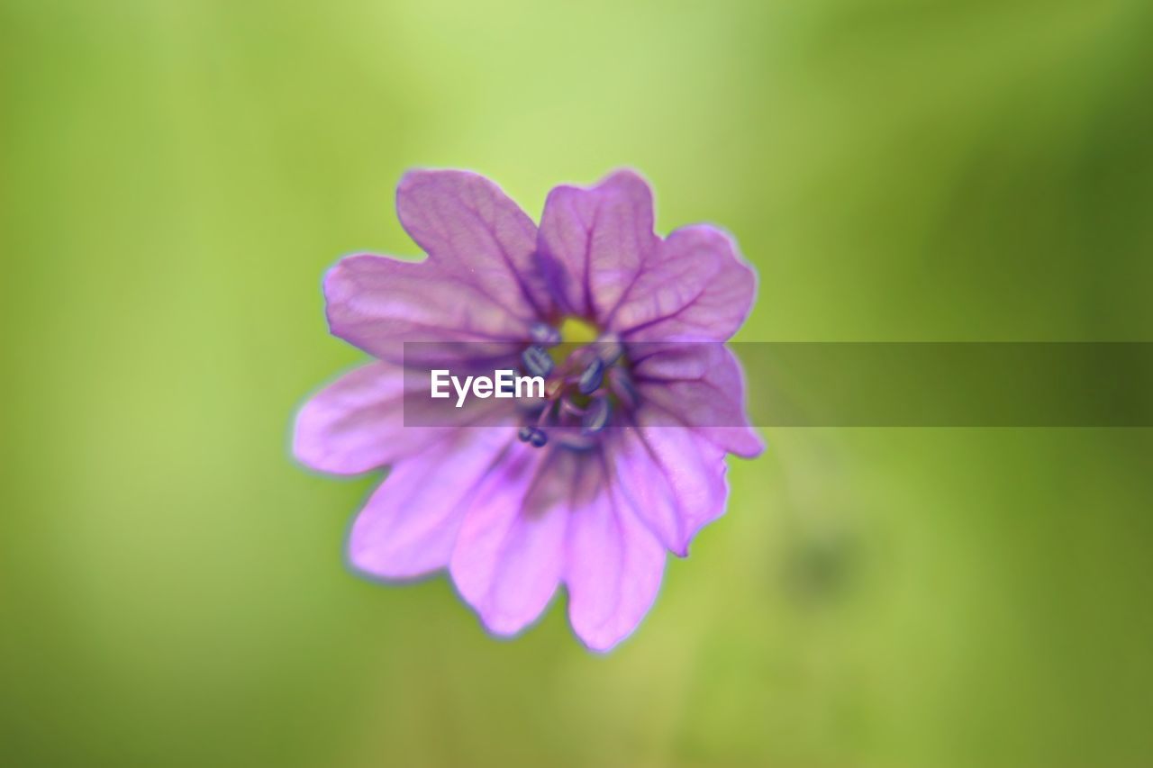 flower, nature, petal, fragility, growth, flower head, beauty in nature, plant, no people, blooming, close-up, freshness, outdoors, day