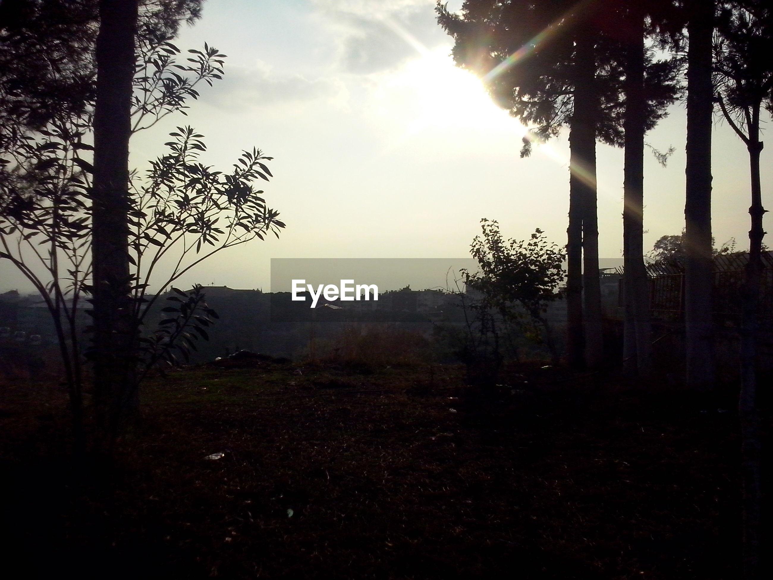 tree, tranquility, tranquil scene, sun, landscape, sky, silhouette, tree trunk, sunlight, scenics, nature, beauty in nature, sunbeam, forest, non-urban scene, sunset, growth, lens flare, field, idyllic