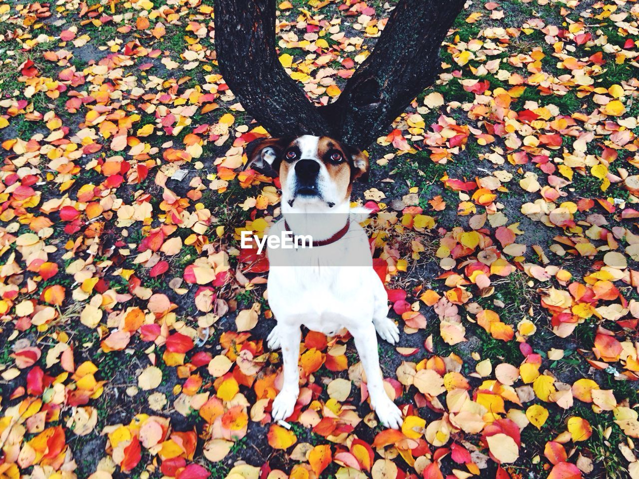 autumn, dog, leaf, one animal, pets, change, animal themes, domestic animals, outdoors, day, mammal, nature, beauty in nature, no people