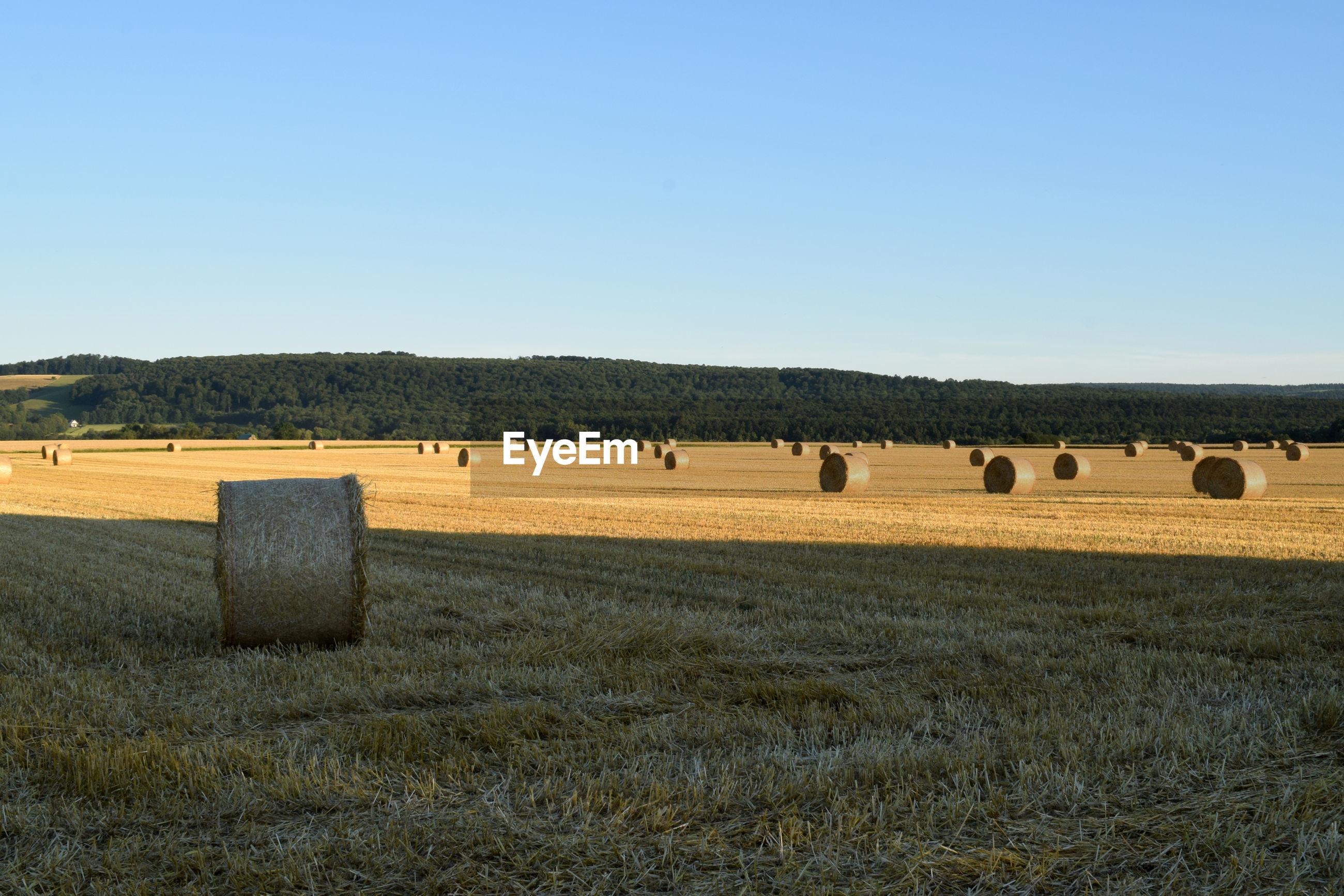 HAY BALES ON FIELD AGAINST CLEAR SKY AGAINST BLUE FARM
