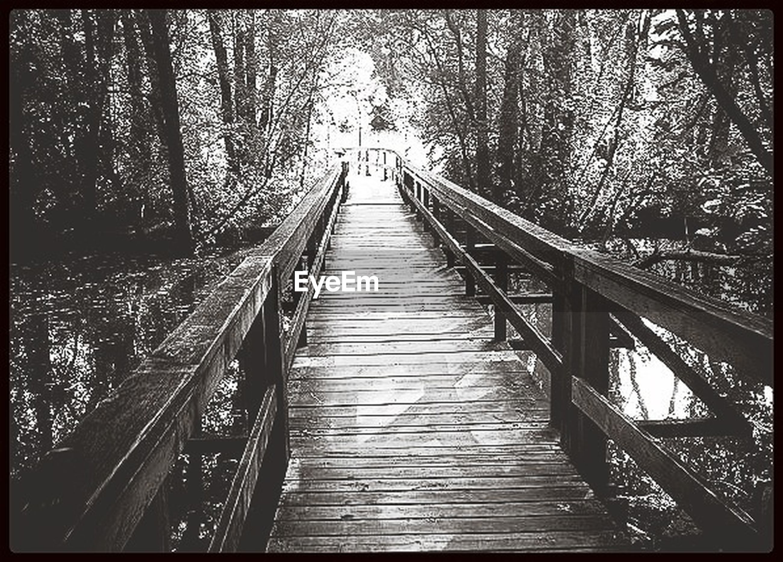 transfer print, the way forward, tree, auto post production filter, diminishing perspective, vanishing point, railing, footbridge, tranquility, forest, nature, tranquil scene, wood - material, transportation, narrow, day, outdoors, connection, long, built structure