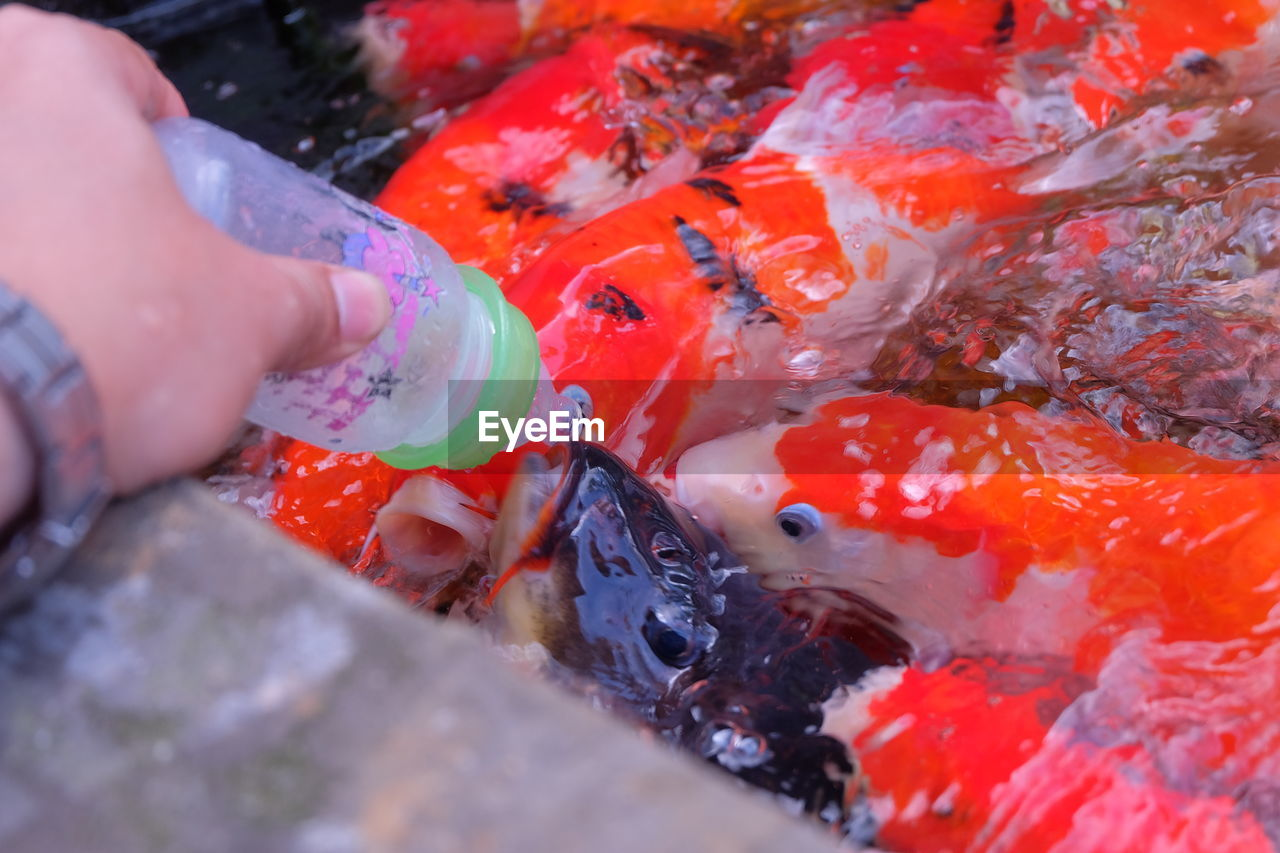 fish, human hand, holding, one person, human body part, human finger, real people, food and drink, high angle view, seafood, food, outdoors, close-up, day, water, freshness, men, healthy eating, people