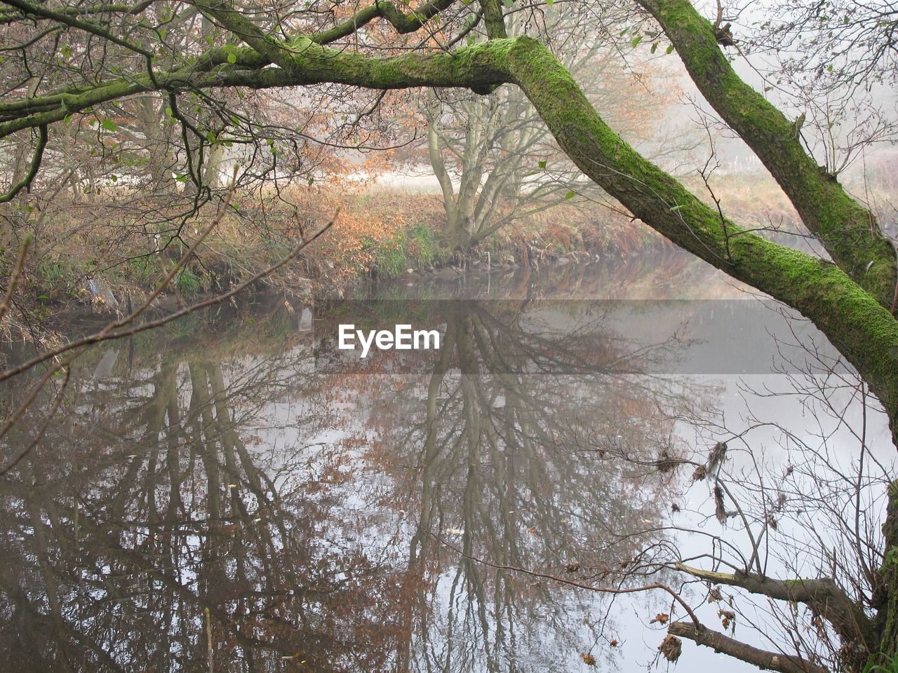 tree, nature, beauty in nature, branch, tranquil scene, outdoors, forest, tranquility, scenics, no people, water, day, autumn, leaf, lake, bare tree, landscape, growth, winter, sky