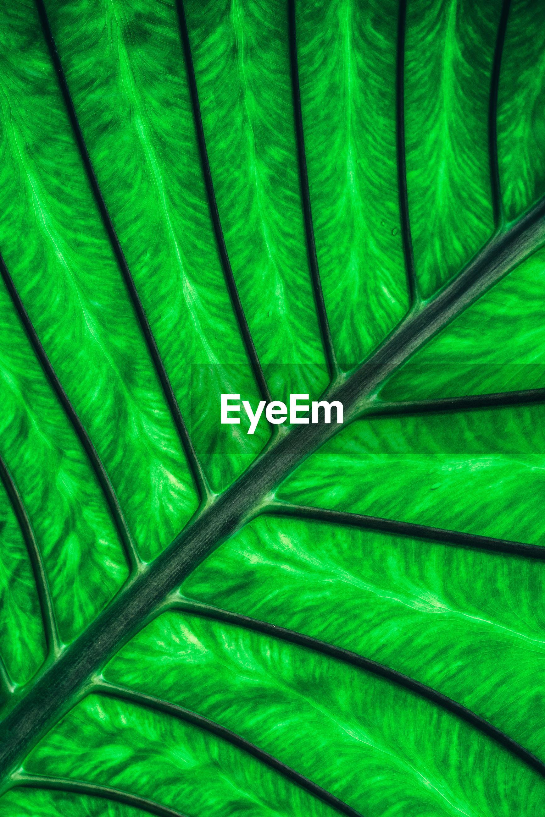 Full frame shot of feather on leaf