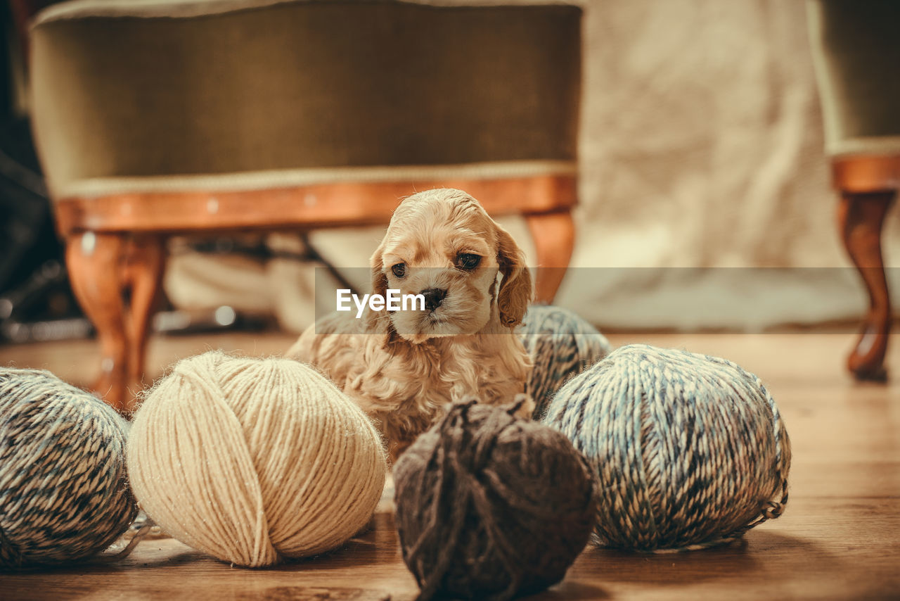 domestic, pets, domestic animals, mammal, dog, canine, indoors, animal themes, animal, no people, art and craft, wool, selective focus, craft, one animal, focus on foreground, wood - material, textile, table, ball of wool, softness