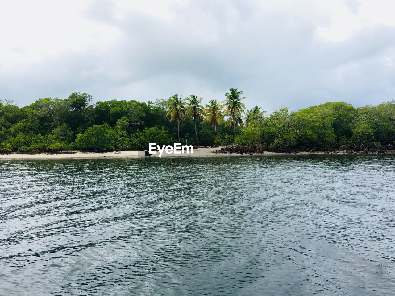water, tree, sky, nature, beauty in nature, tropical climate, plant, land, sea, tranquility, scenics - nature, cloud - sky, waterfront, tranquil scene, palm tree, environment, freedom, beach, remote, outdoors, no people