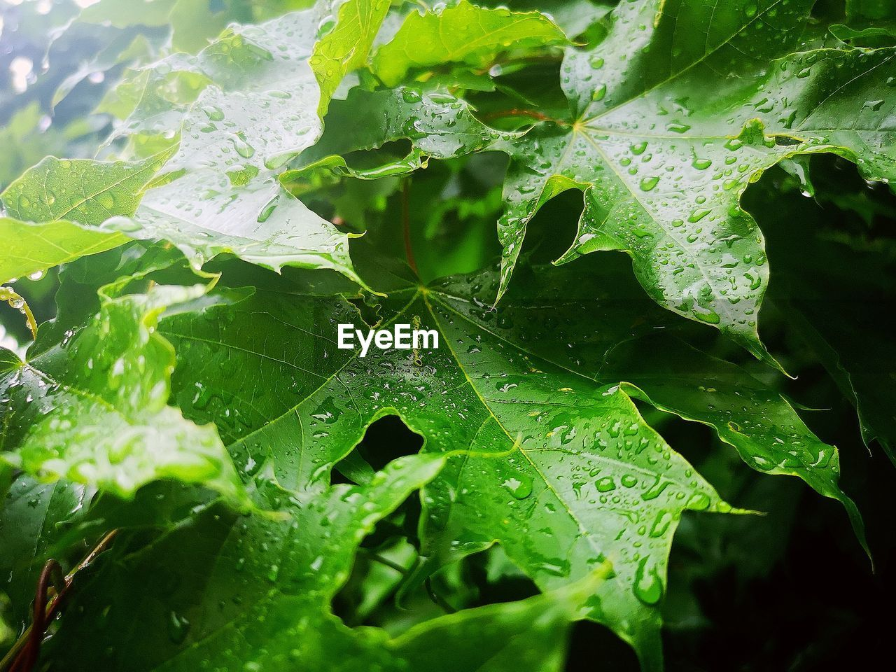 leaf, plant part, drop, water, green color, wet, growth, close-up, nature, plant, leaf vein, beauty in nature, no people, day, rain, leaves, outdoors, selective focus, raindrop, dew, rainy season, purity