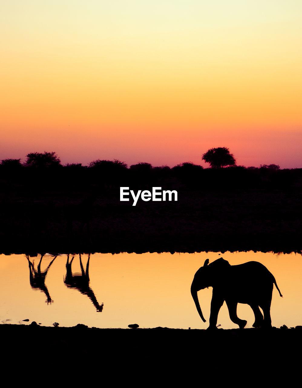 SILHOUETTE ELEPHANT ON LANDSCAPE AGAINST SUNSET SKY