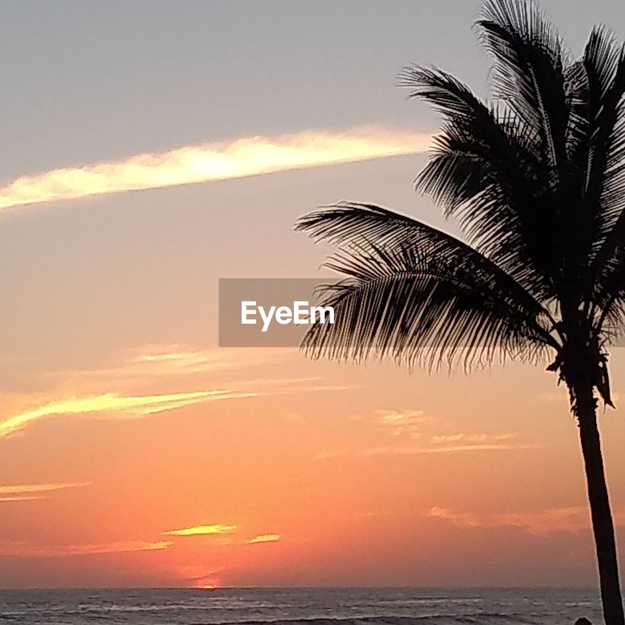 sky, sunset, sea, water, horizon over water, horizon, beauty in nature, palm tree, tropical climate, scenics - nature, tree, tranquility, tranquil scene, cloud - sky, nature, orange color, no people, plant, silhouette, outdoors, palm leaf, coconut palm tree