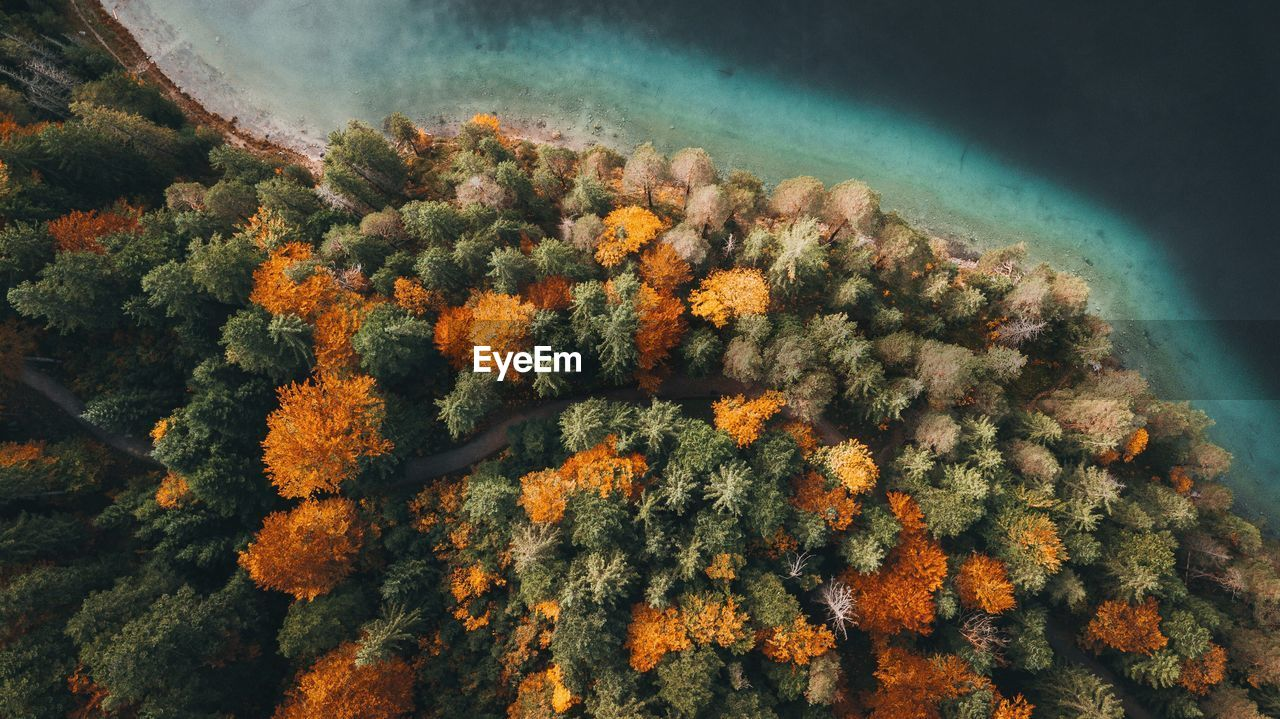 Aerial View Of Autumn Trees By Sea