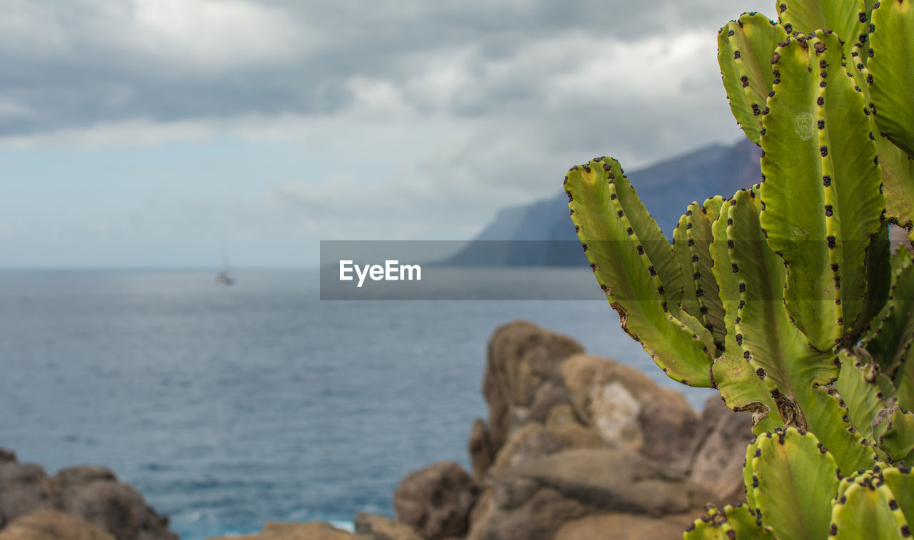 cactus, succulent plant, beauty in nature, sky, sea, plant, scenics - nature, nature, green color, day, growth, cloud - sky, no people, close-up, rock, water, horizon, tranquility, focus on foreground, tranquil scene, horizon over water, outdoors