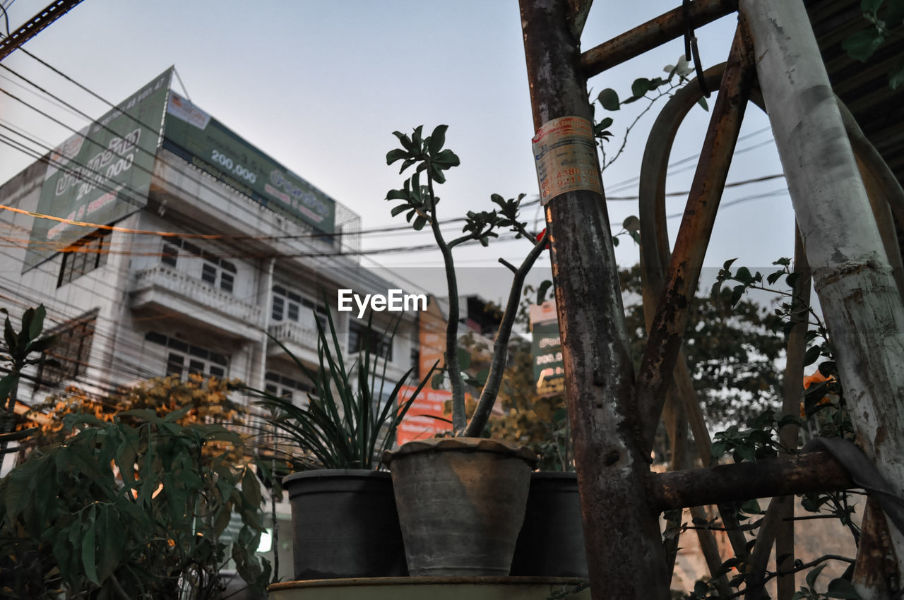 tree, growth, building exterior, architecture, potted plant, built structure, outdoors, day, plant, no people, leaf, palm tree, flower, nature, sky
