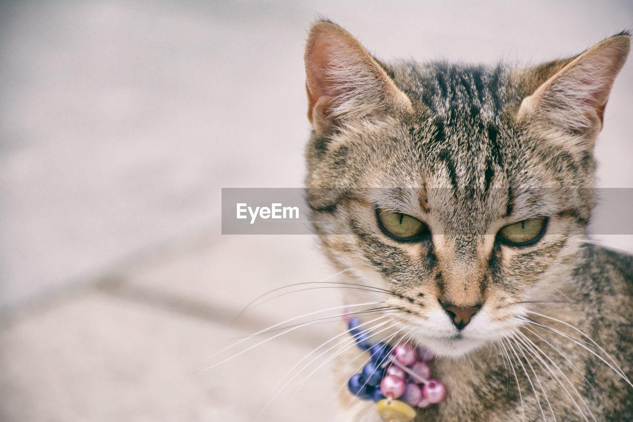 Portrait Of Cat Standing Outdoors