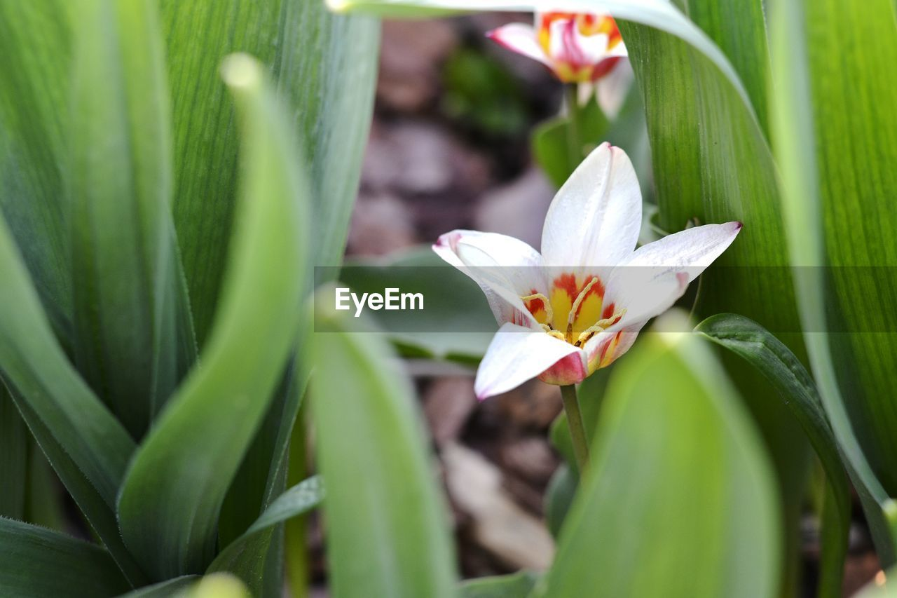 petal, flower, growth, nature, freshness, beauty in nature, leaf, fragility, flower head, plant, green color, blooming, day, no people, close-up, outdoors