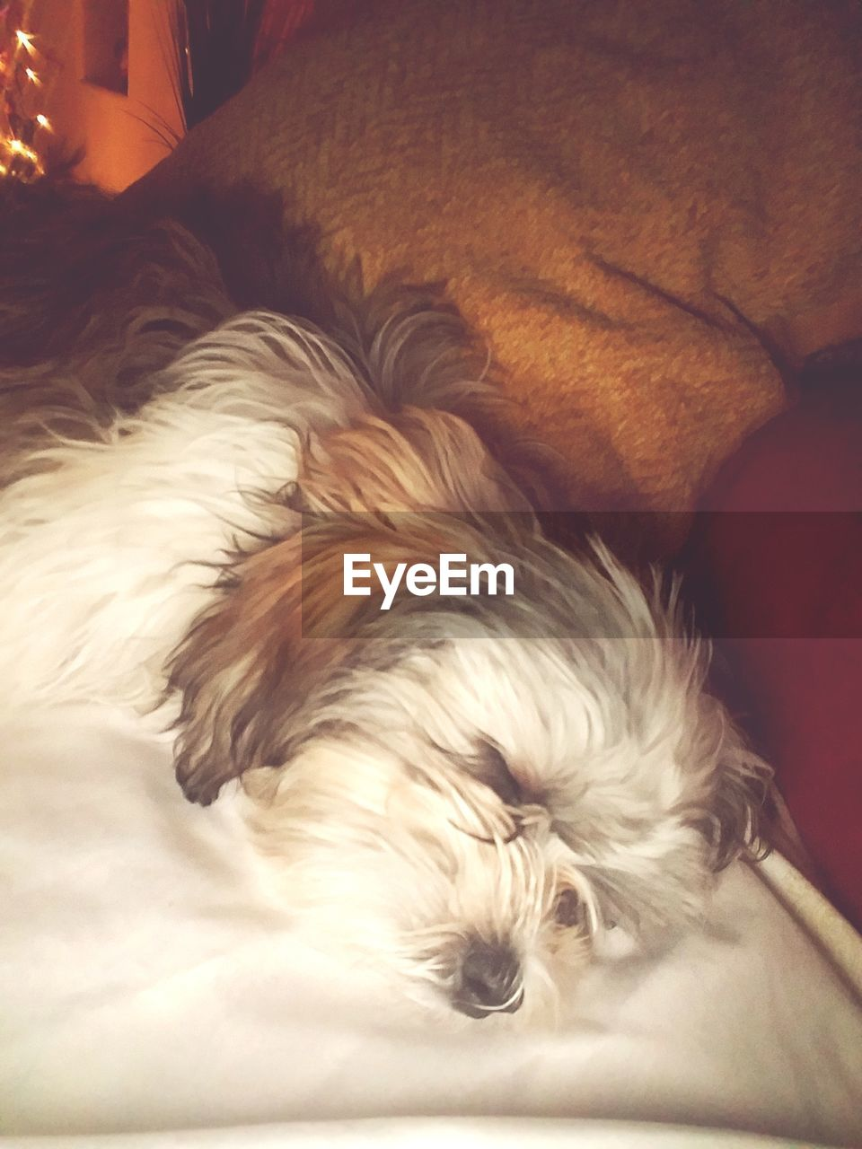 pets, dog, domestic animals, one animal, animal themes, mammal, sleeping, animal hair, relaxation, lying down, indoors, resting, no people, bed, close-up, day