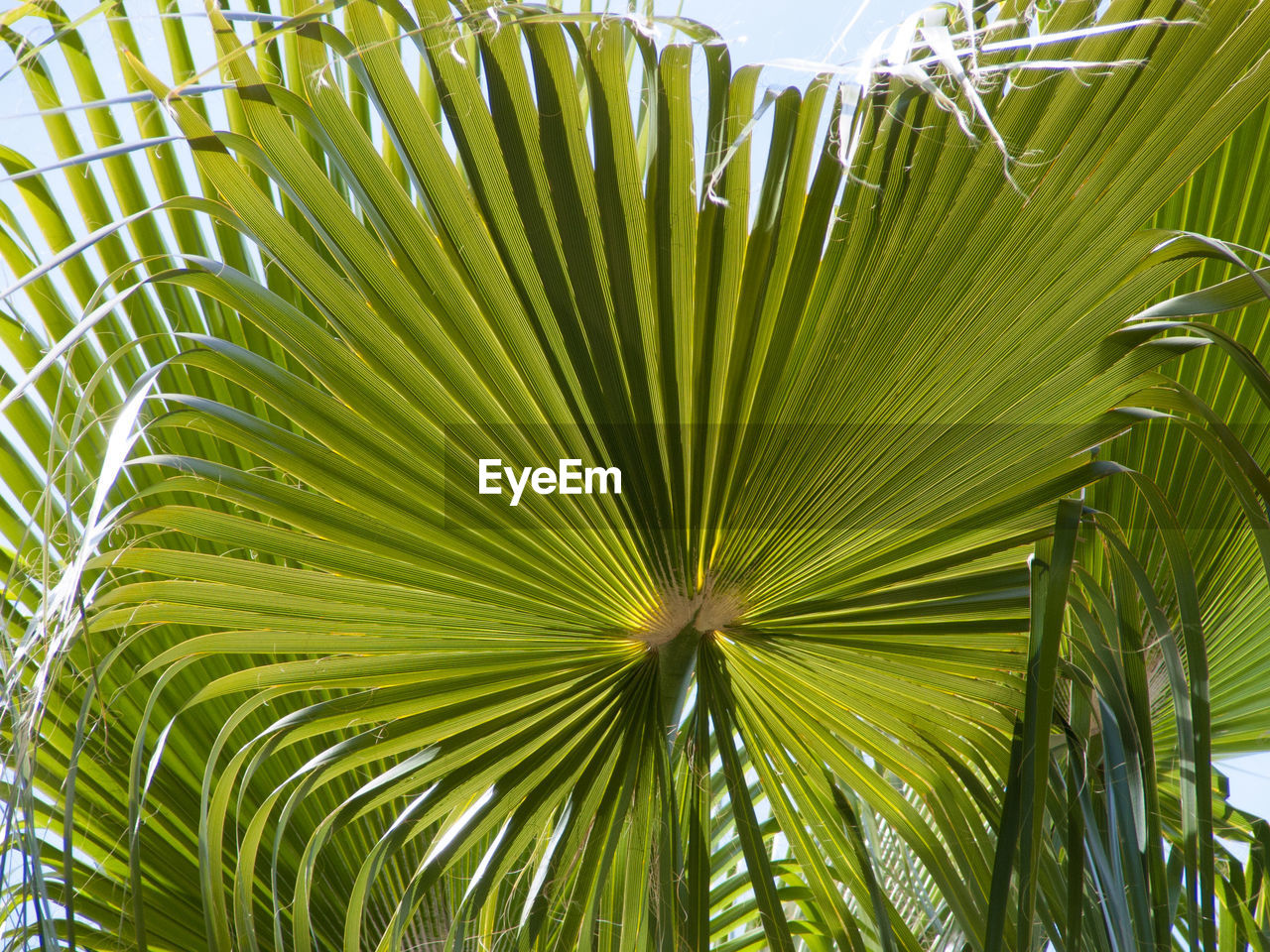 palm tree, palm leaf, green color, leaf, frond, growth, nature, tropical climate, close-up, freshness, beauty in nature, day, plant, no people, outdoors, tree, fragility