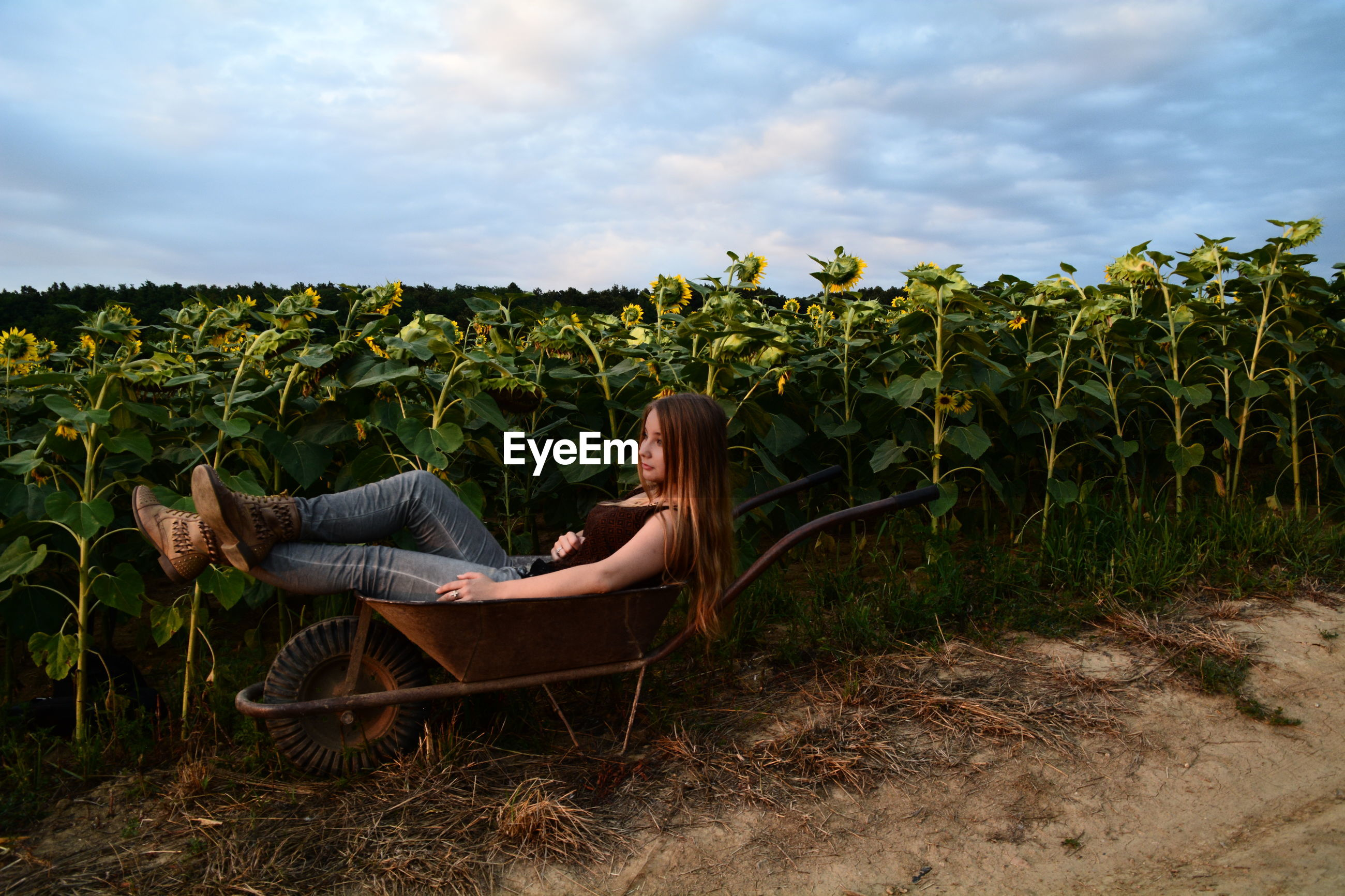 Full length of young woman resting on wheelbarrow by sunflower field
