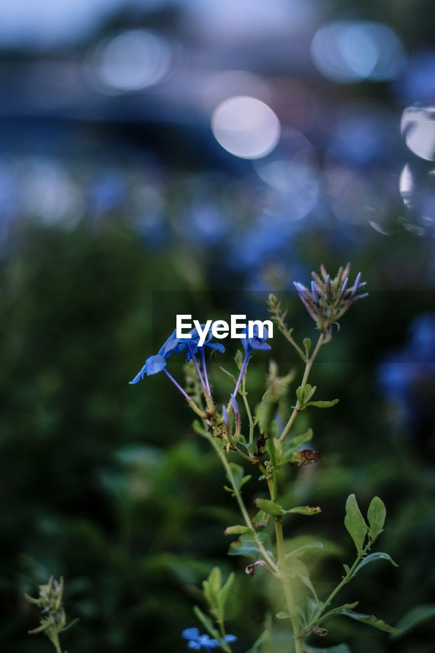 plant, growth, flower, flowering plant, fragility, vulnerability, beauty in nature, focus on foreground, freshness, close-up, no people, nature, selective focus, day, outdoors, petal, flower head, green color, plant part, inflorescence