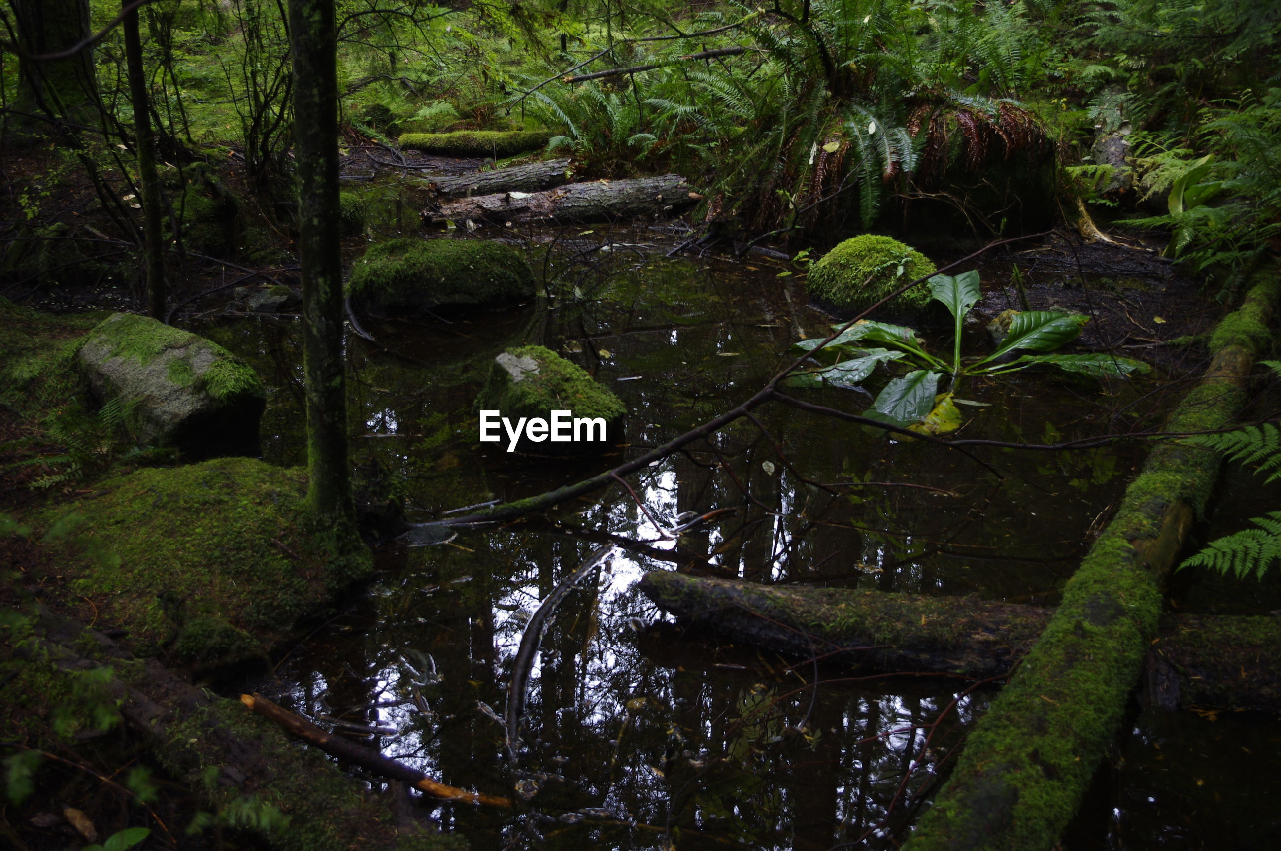 VIEW OF RIVER IN FOREST