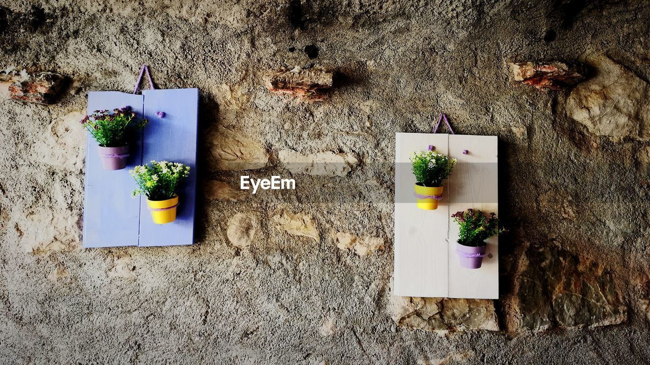 plant, no people, wall - building feature, nature, flower, potted plant, flowering plant, indoors, table, food and drink, freshness, decoration, architecture, food, still life, day, built structure, directly above, high angle view, flower arrangement, flower pot