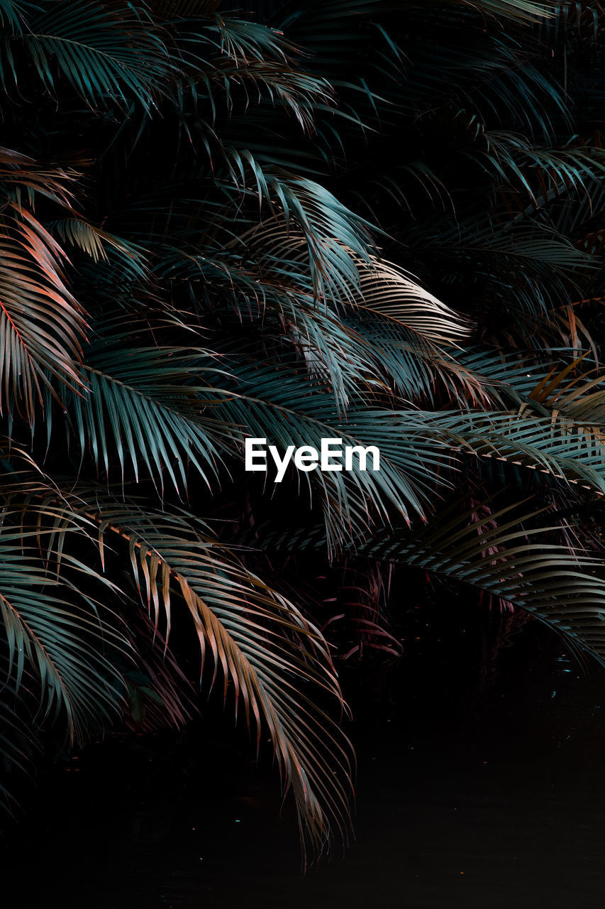 night, no people, beauty in nature, nature, palm tree, tropical climate, outdoors, leaf, growth, tree, plant, backgrounds, low angle view, full frame, illuminated, plant part, close-up, motion, palm leaf, multi colored