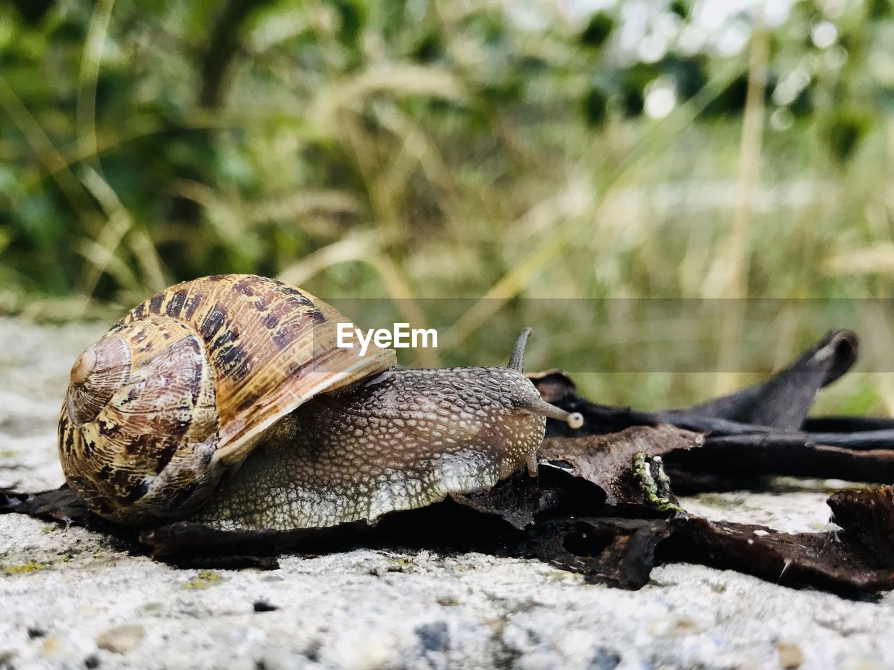 animal wildlife, animal, animal themes, shell, mollusk, animals in the wild, gastropod, one animal, invertebrate, close-up, snail, animal shell, day, nature, no people, selective focus, focus on foreground, boredom, animal antenna, animal body part, crawling