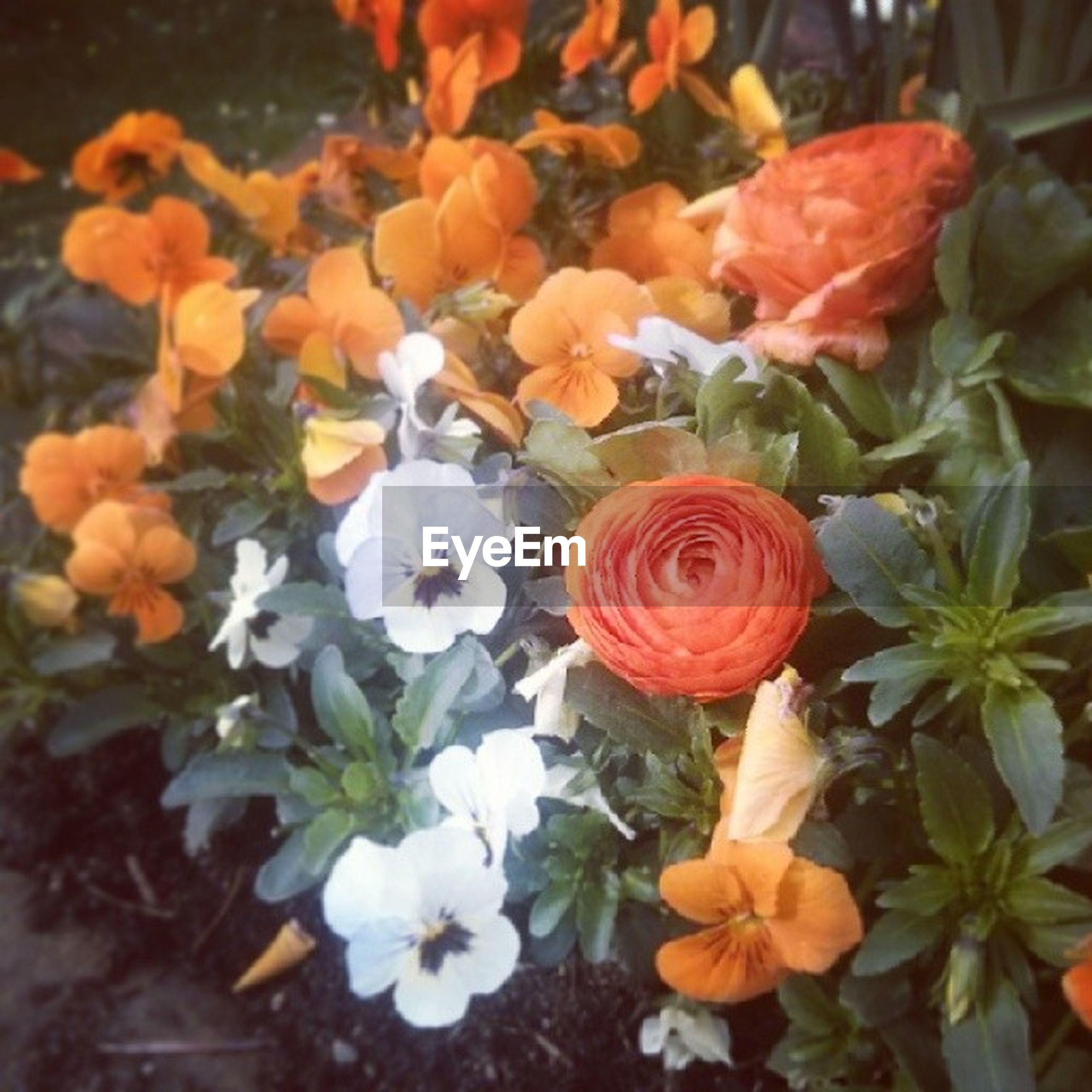 flower, petal, freshness, fragility, flower head, beauty in nature, growth, blooming, plant, nature, close-up, rose - flower, red, leaf, in bloom, focus on foreground, high angle view, tulip, blossom, orange color