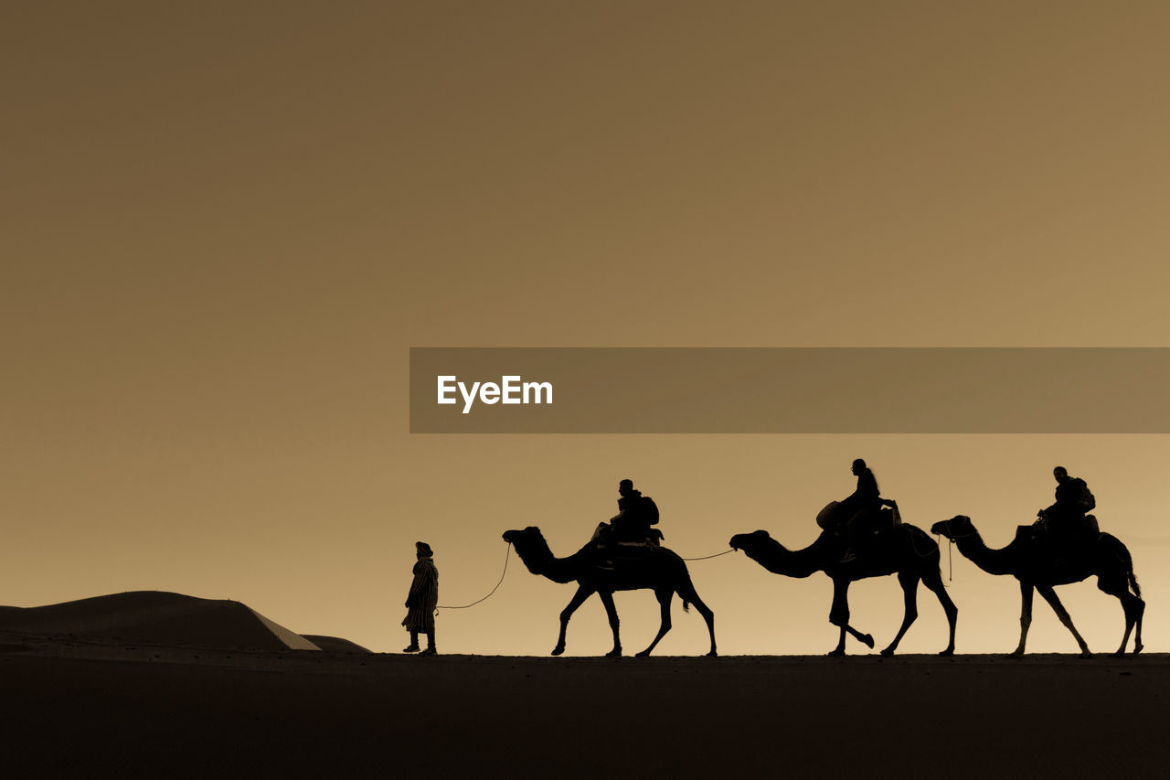 sky, silhouette, copy space, sunset, desert, camel, mammal, group of people, land, domestic animals, men, real people, clear sky, nature, group of animals, scenics - nature, lifestyles, domestic, riding, arid climate, outdoors, climate