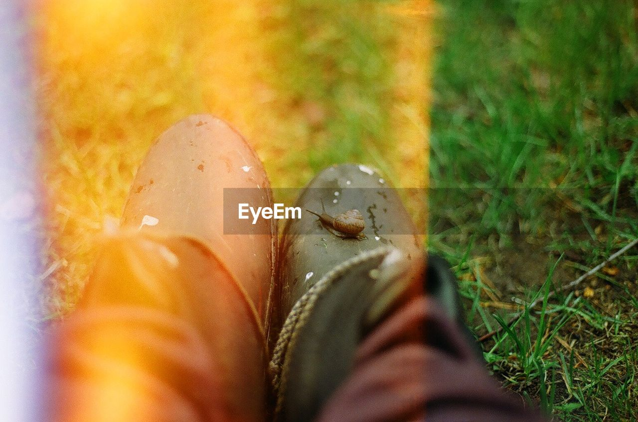 selective focus, shoe, real people, one person, human leg, human body part, low section, grass, close-up, outdoors, day, nature, people