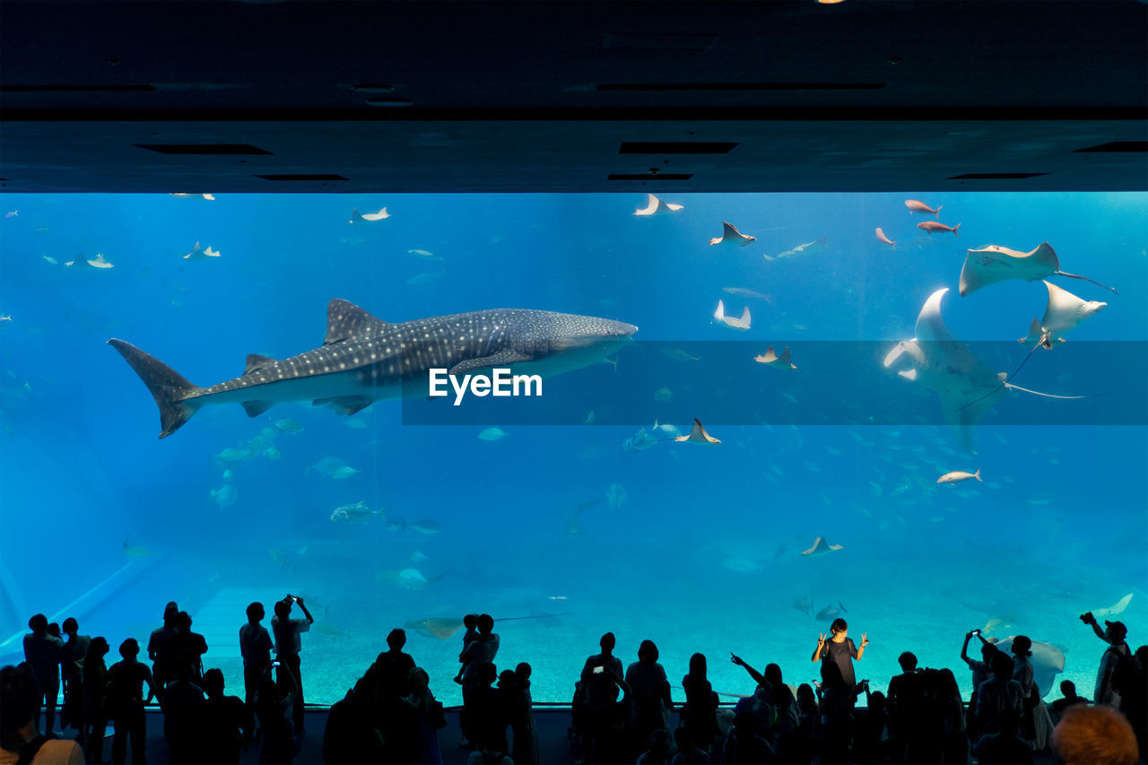Group Of People Looking At Whale Shark In Aquarium