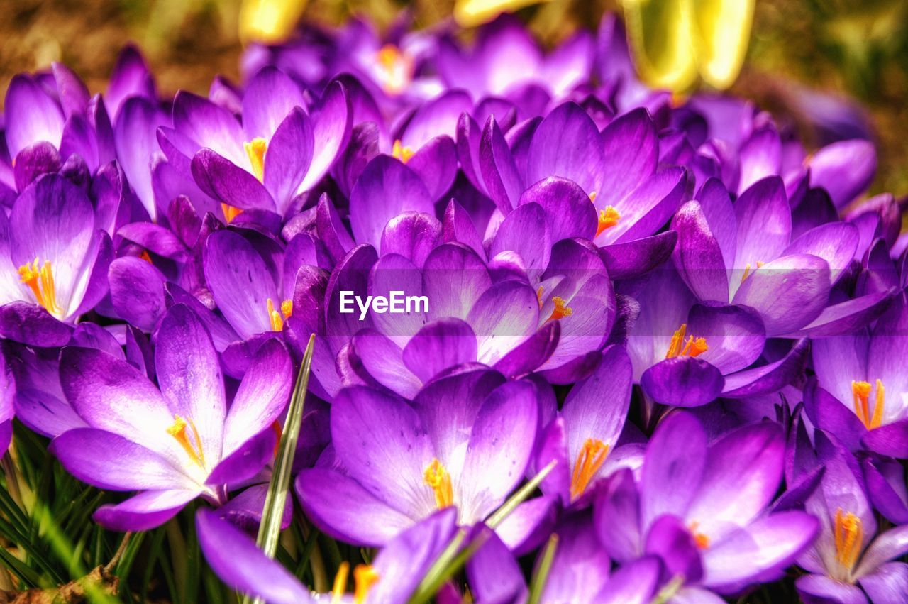 flower, flowering plant, purple, beauty in nature, plant, fragility, close-up, vulnerability, freshness, petal, inflorescence, flower head, growth, nature, no people, focus on foreground, outdoors, day, full frame, selective focus, bunch of flowers