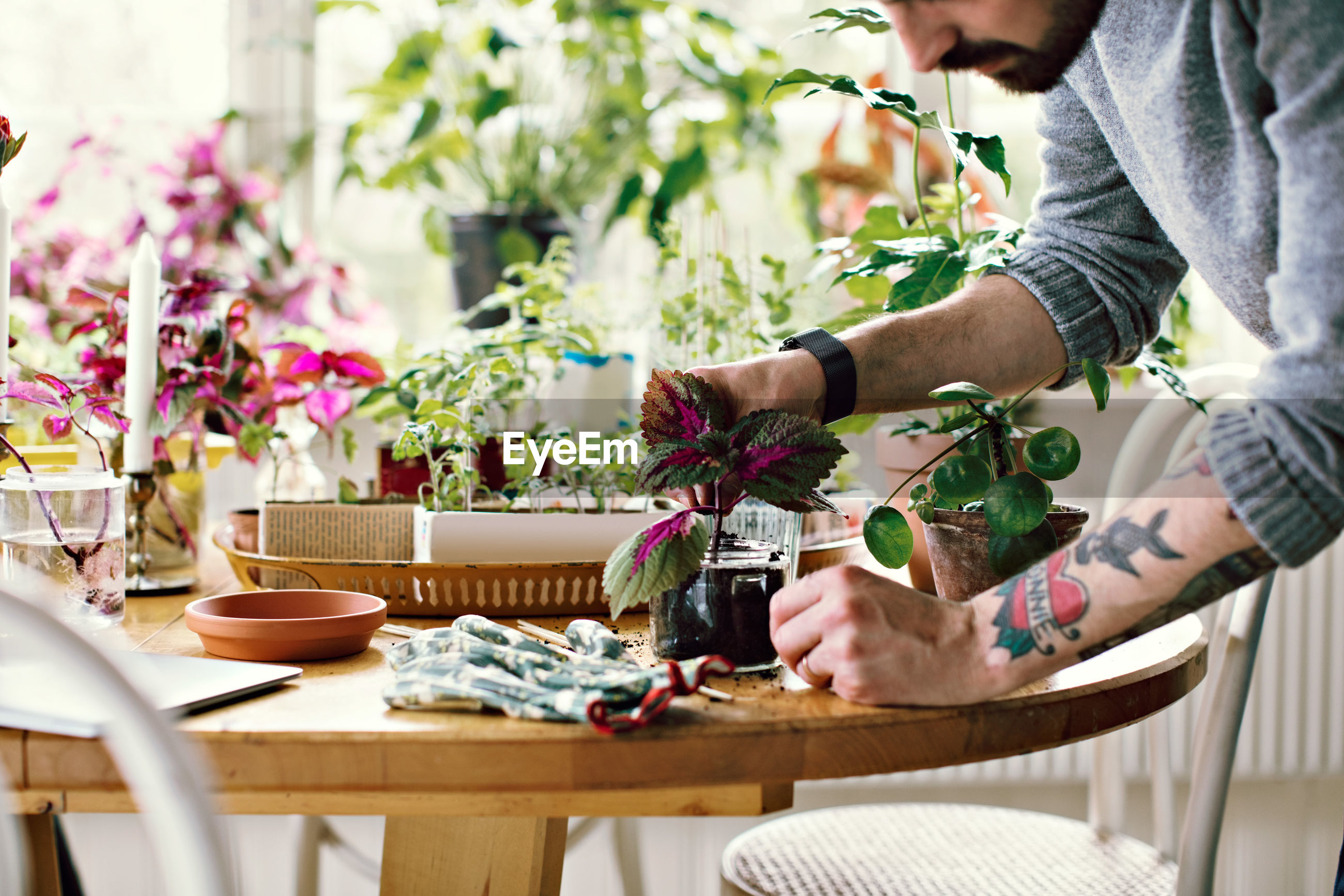 MIDSECTION OF MAN HOLDING POTTED PLANT ON TABLE AT HOME