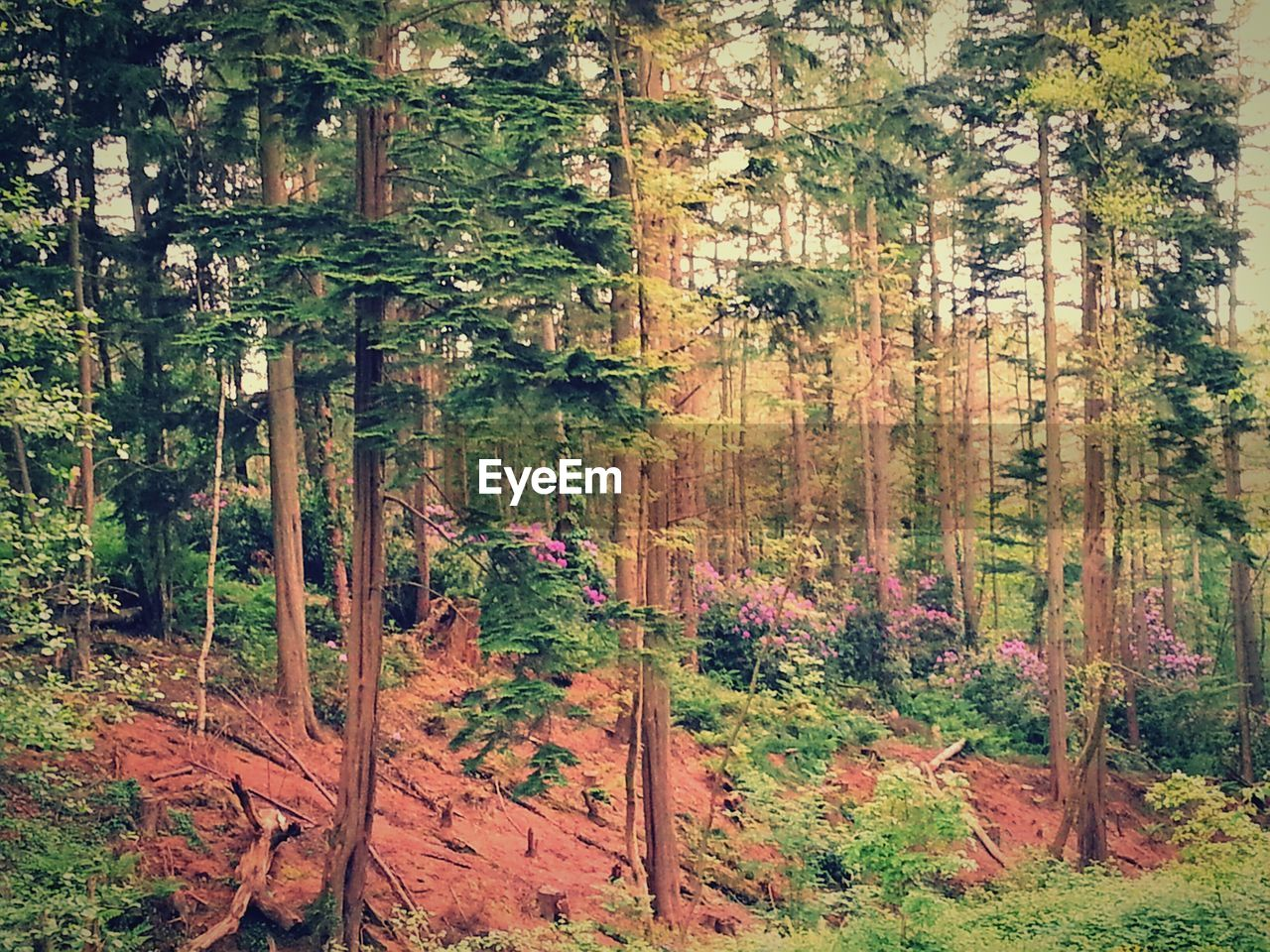 forest, tree, nature, growth, no people, vegetation, tranquility, plant, flora, outdoors, day, tree trunk, beauty in nature, landscape, scenics