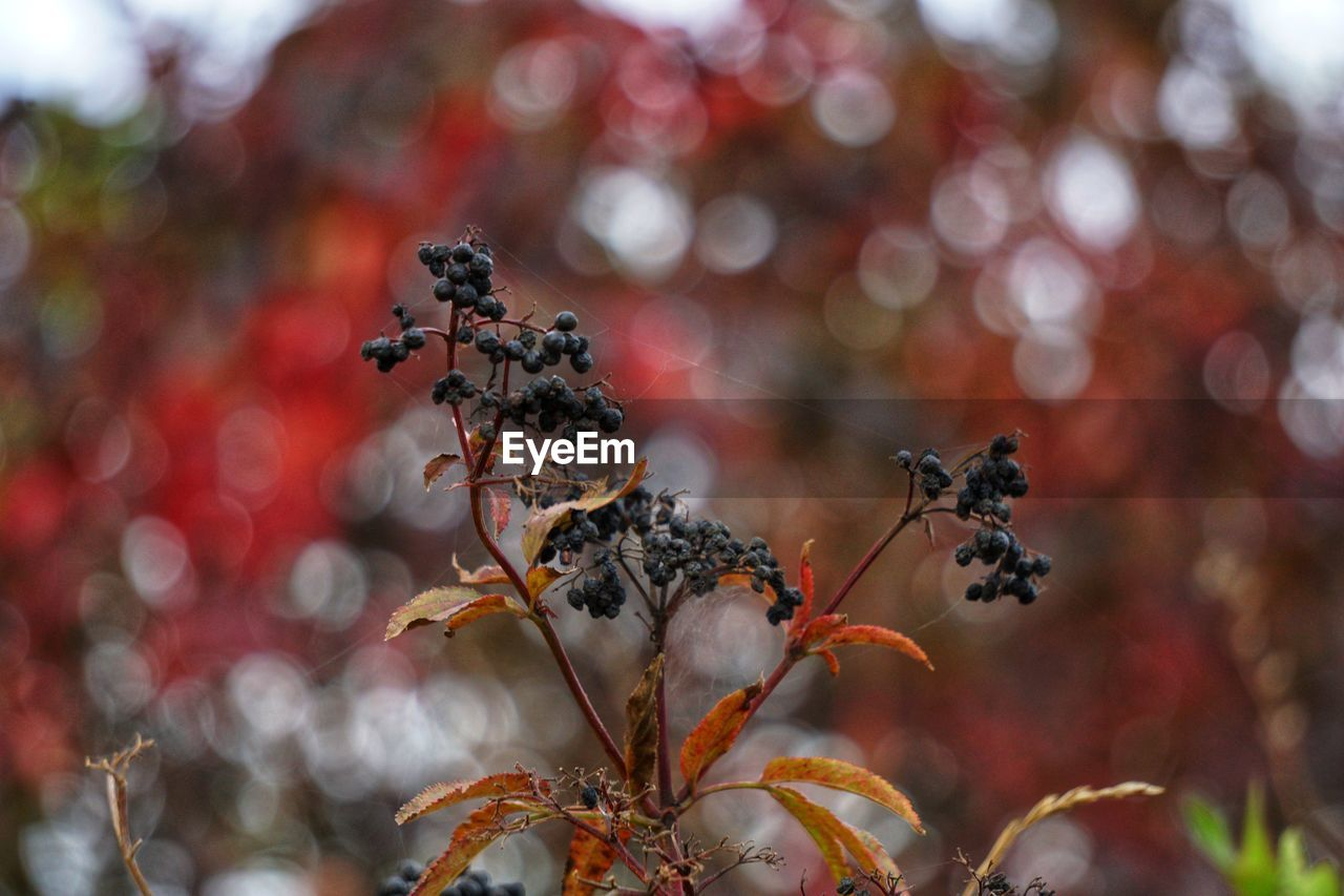 plant, close-up, growth, focus on foreground, no people, day, nature, flowering plant, beauty in nature, vulnerability, fragility, selective focus, flower, animals in the wild, freshness, outdoors, animal wildlife, invertebrate, animal themes, insect, flower head, pollination, wilted plant