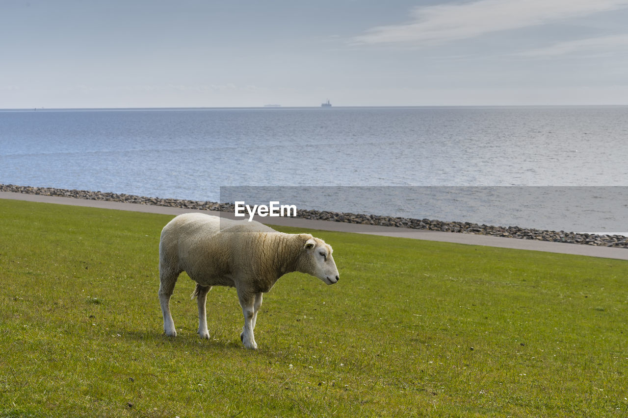 HORSE STANDING IN SEA