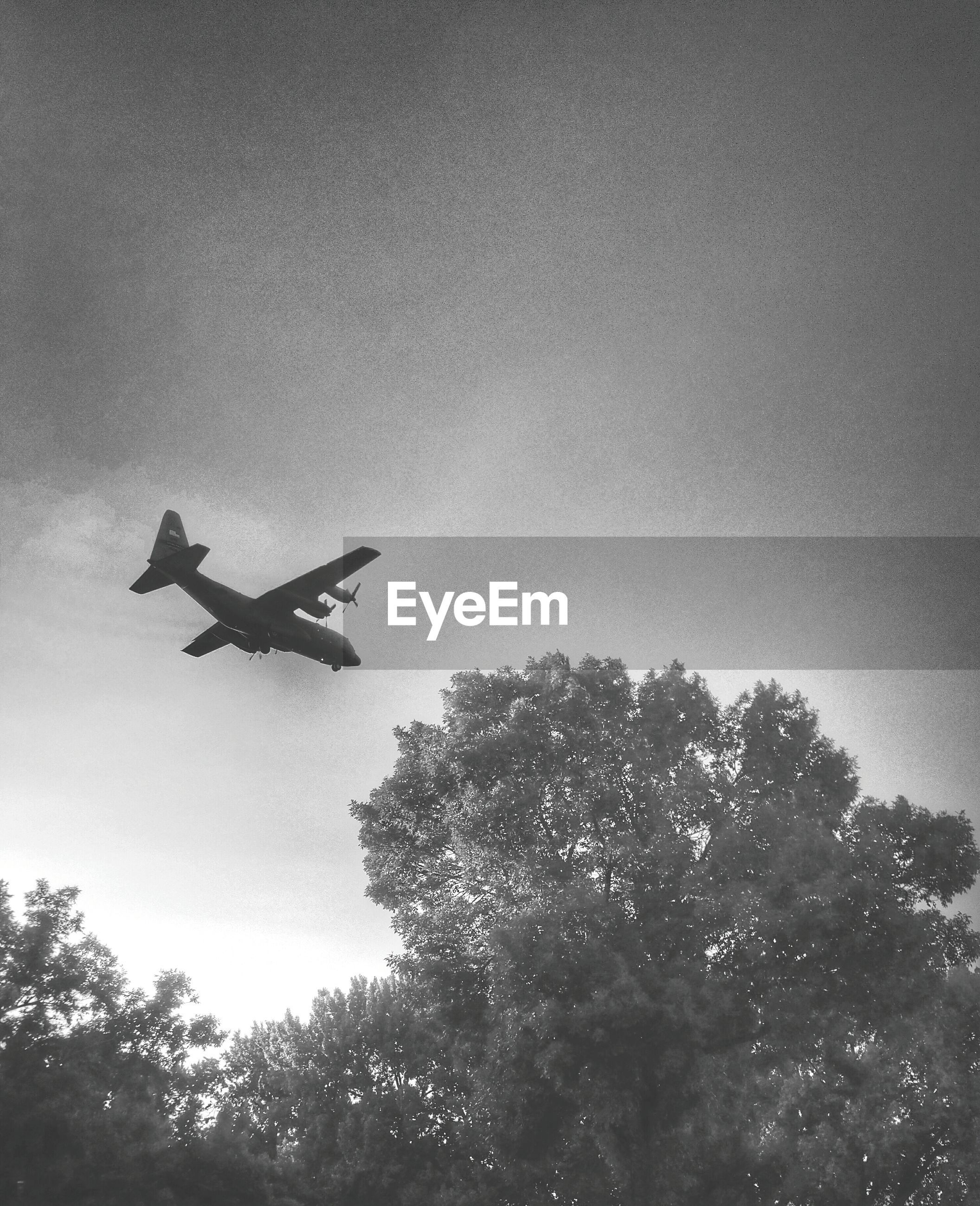 Low angle view of airplane flying over tree
