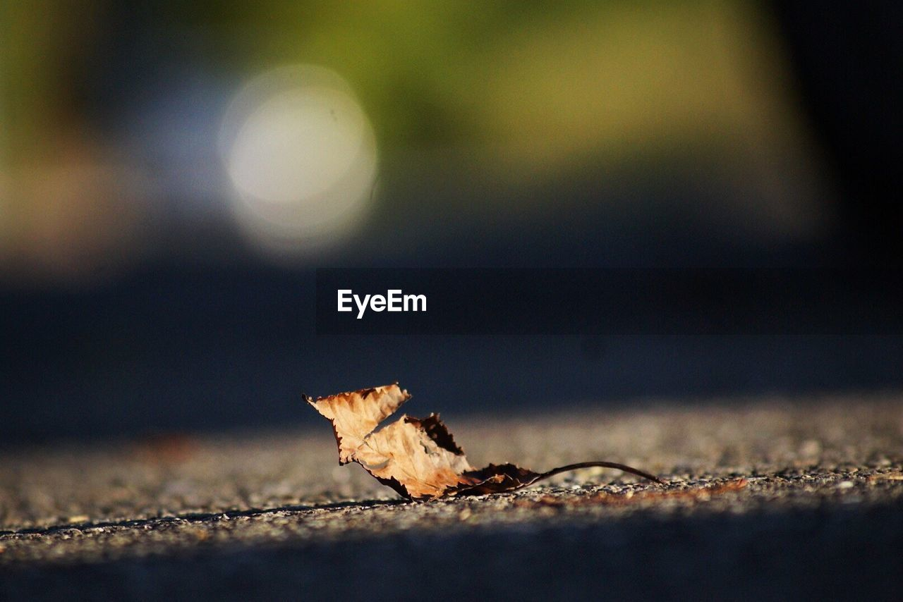 leaf, dry, autumn, selective focus, change, close-up, no people, nature, outdoors, day, fragility