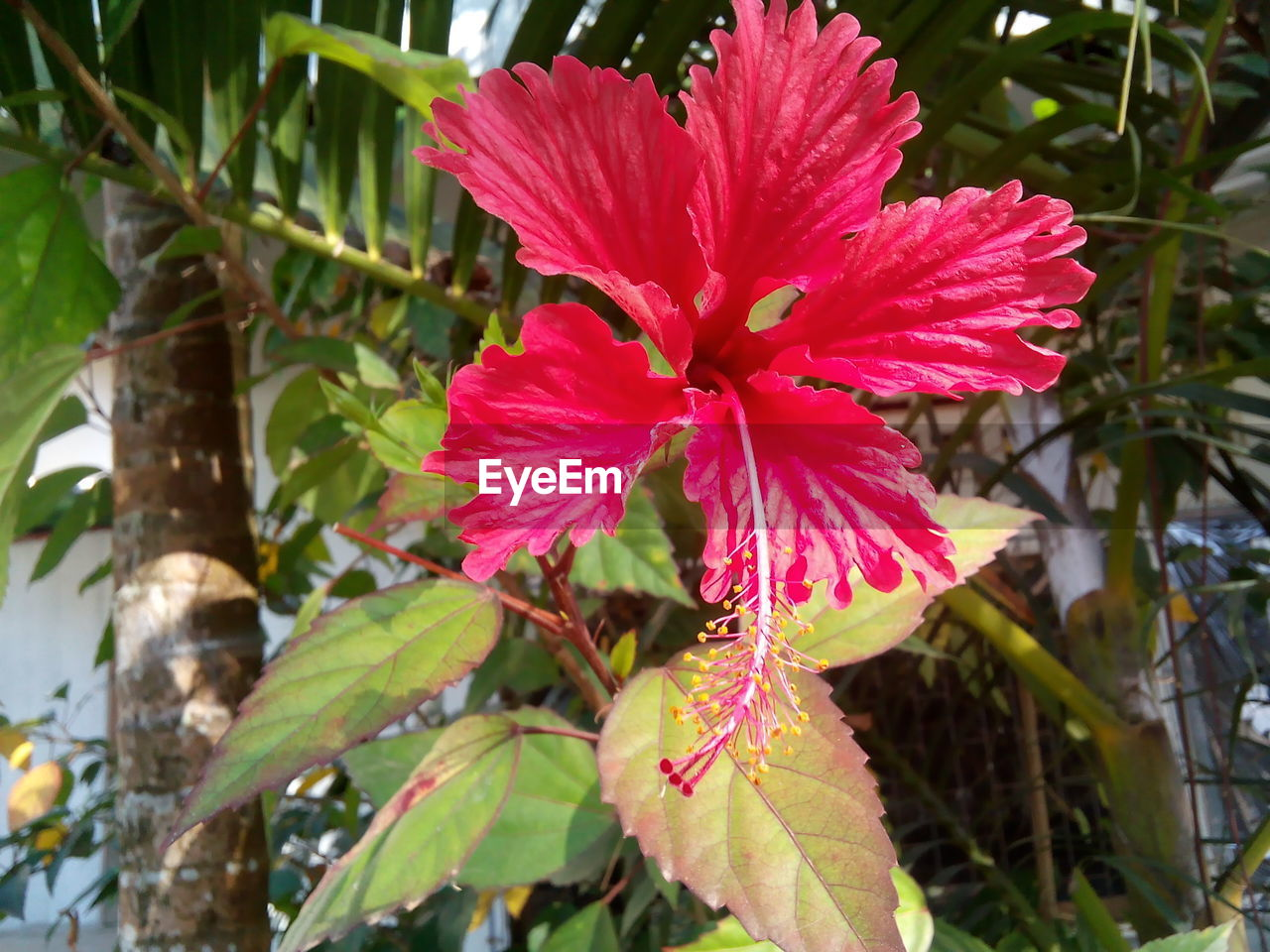 growth, flower, nature, beauty in nature, fragility, red, plant, leaf, petal, day, no people, outdoors, flower head, freshness, close-up, blooming, hibiscus